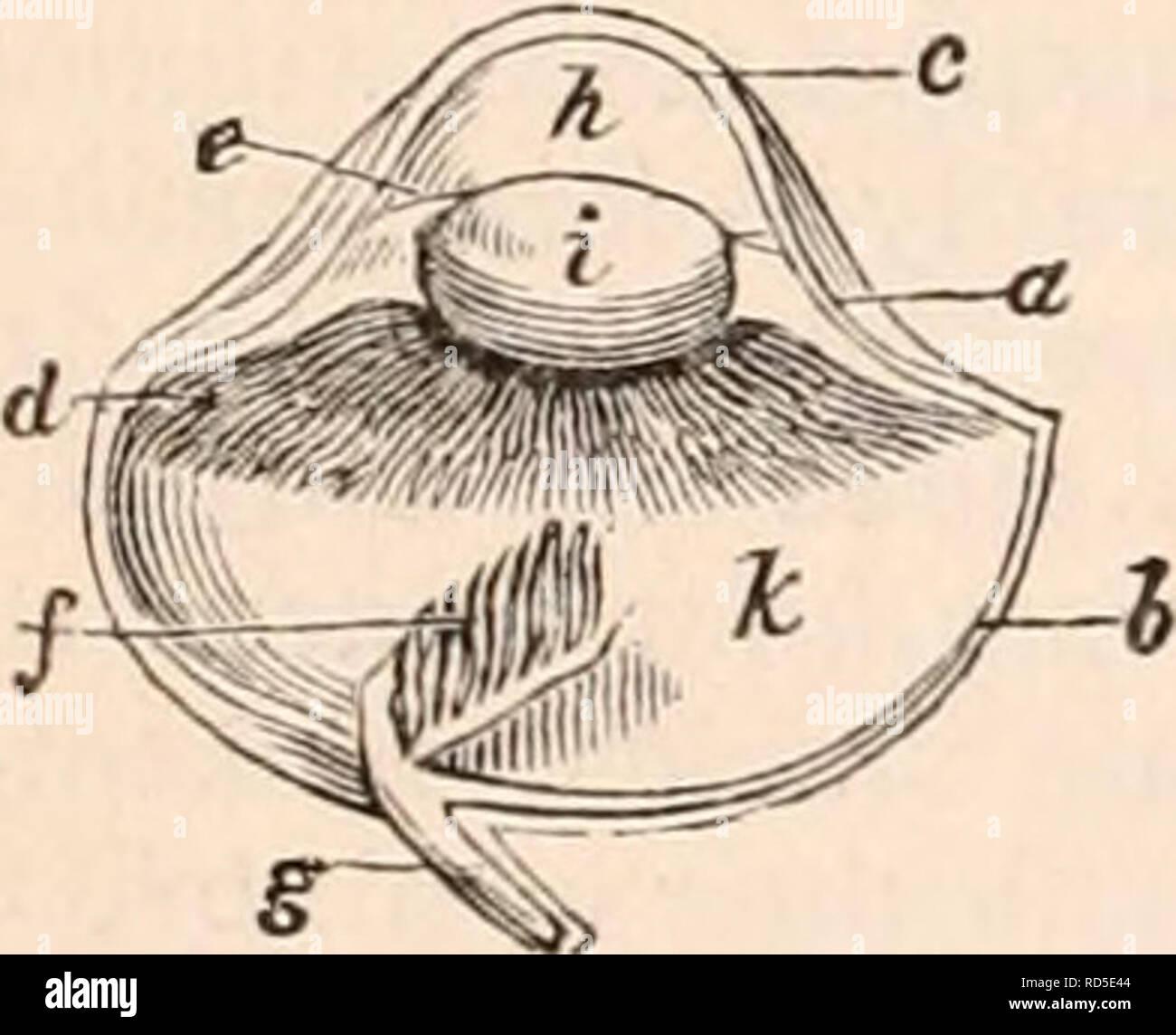 La Cyclopaedia De Anatomía Y Fisiología Anatomía