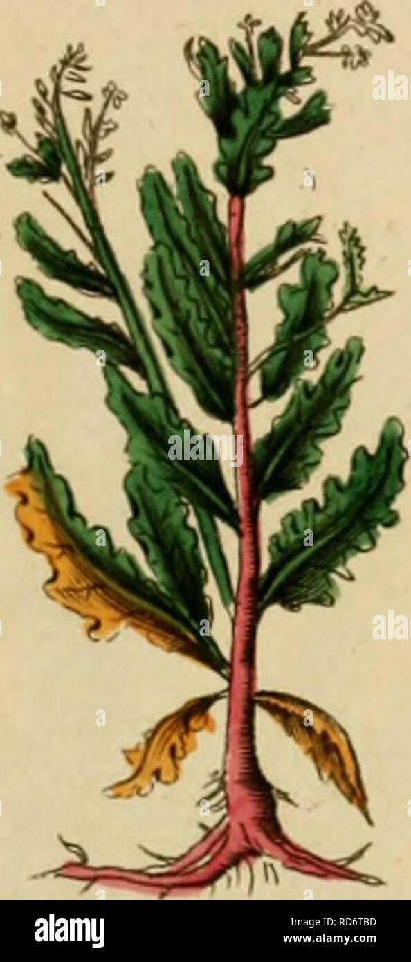 . Culpepper's médico inglés ; y complete herbal. La botánica médica; Materia Medica, hortalizas; Materia Medica; Botánica; plantas medicinales. ('Ti/'i/i-'i'(iifi(/t-. Por favor tenga en cuenta que estas imágenes son extraídas de la página escaneada imágenes que podrían haber sido mejoradas digitalmente para mejorar la legibilidad, la coloración y el aspecto de estas ilustraciones pueden no parecerse perfectamente a la obra original. Culpeper, Nicholas, 1616-1654; Sibley, Ebenezer, 1751-1800. Londres: Impreso por el autor, y se venden en la Oficina Directorio británico Foto de stock