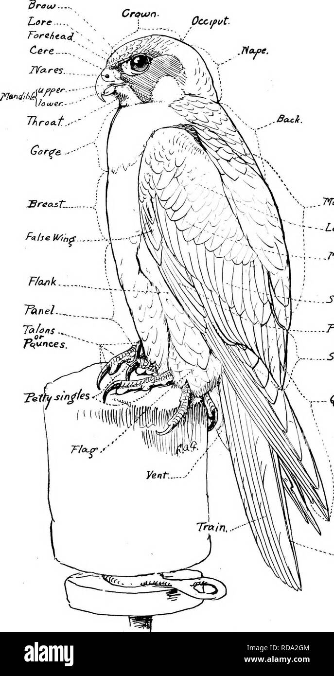 Librosubjectbirds Imágenes De Stock & Librosubjectbirds