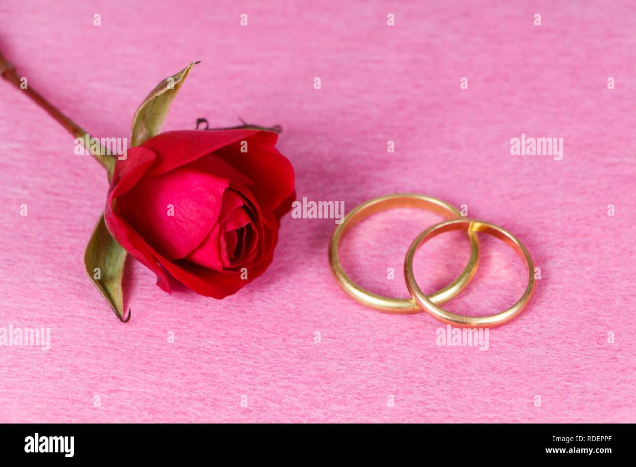 5a1eb5ba8f74 Dos anillos de boda en oro y rosa roja sobre un fondo de color rosa Imagen
