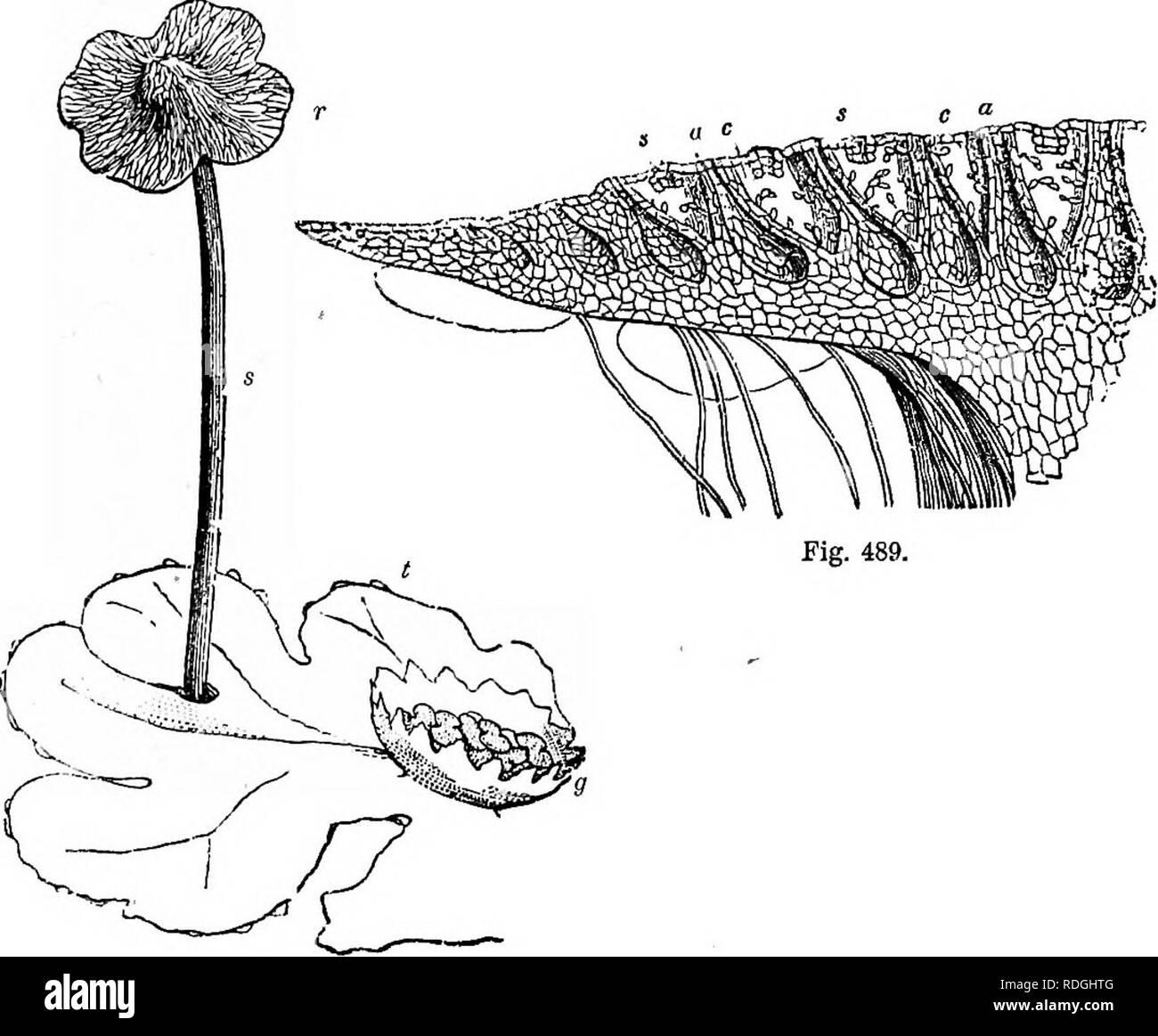 Un Manual De Botánica Ser Una Introducción Al Estudio De