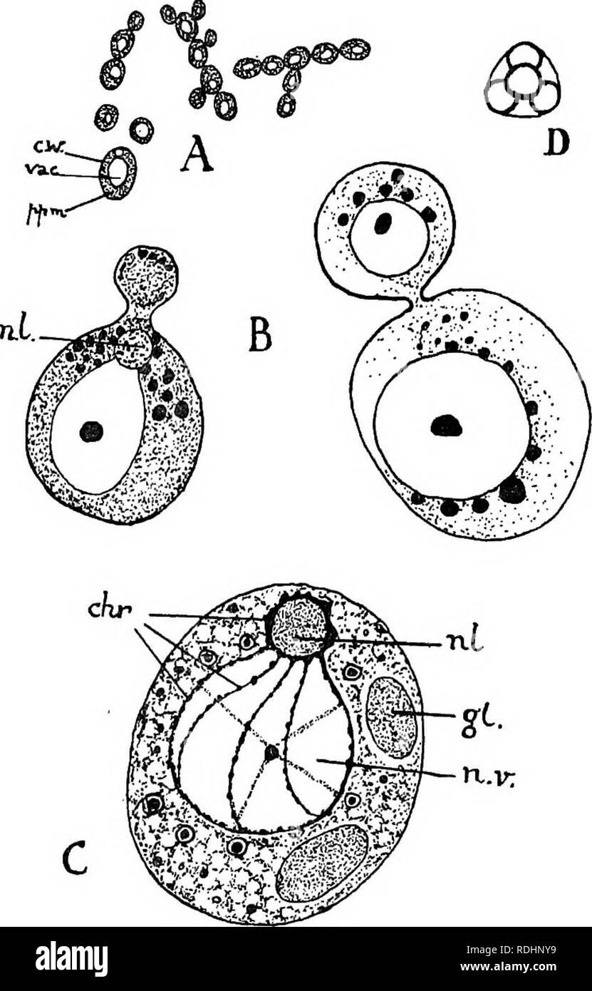 Elementos De La Biología Vegetal La Fisiología De Planta