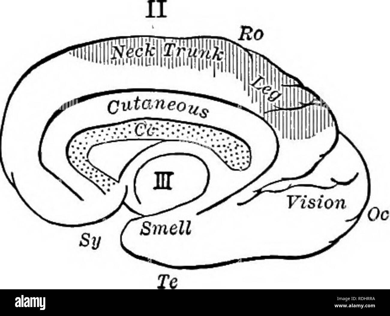 un libro de texto en general fisiologia y anatomia fisiologia comparativo anatomia vision fig 197 diagramas que ilustran la localizacion de funciones en el cerebro la superficie exterior del hemisferio izquierdo ii la superficie interior de la misma areas motoras estan sombreadas cc cuerpo calloso fr frontal lohe oc lohe occipital pa lobulo parietal ito fisura de rolando s sylvian fisura ftci lobulo temporal lado derecho del cuerpo y viceversa el jefe de areas motoras y sensoriales de los hemisferios se muestran en la figura 197 fiinctions de medula este es el centro de esos reflejos que contro rdhrra un libro de texto en general, fisiología y anatomía fisiología