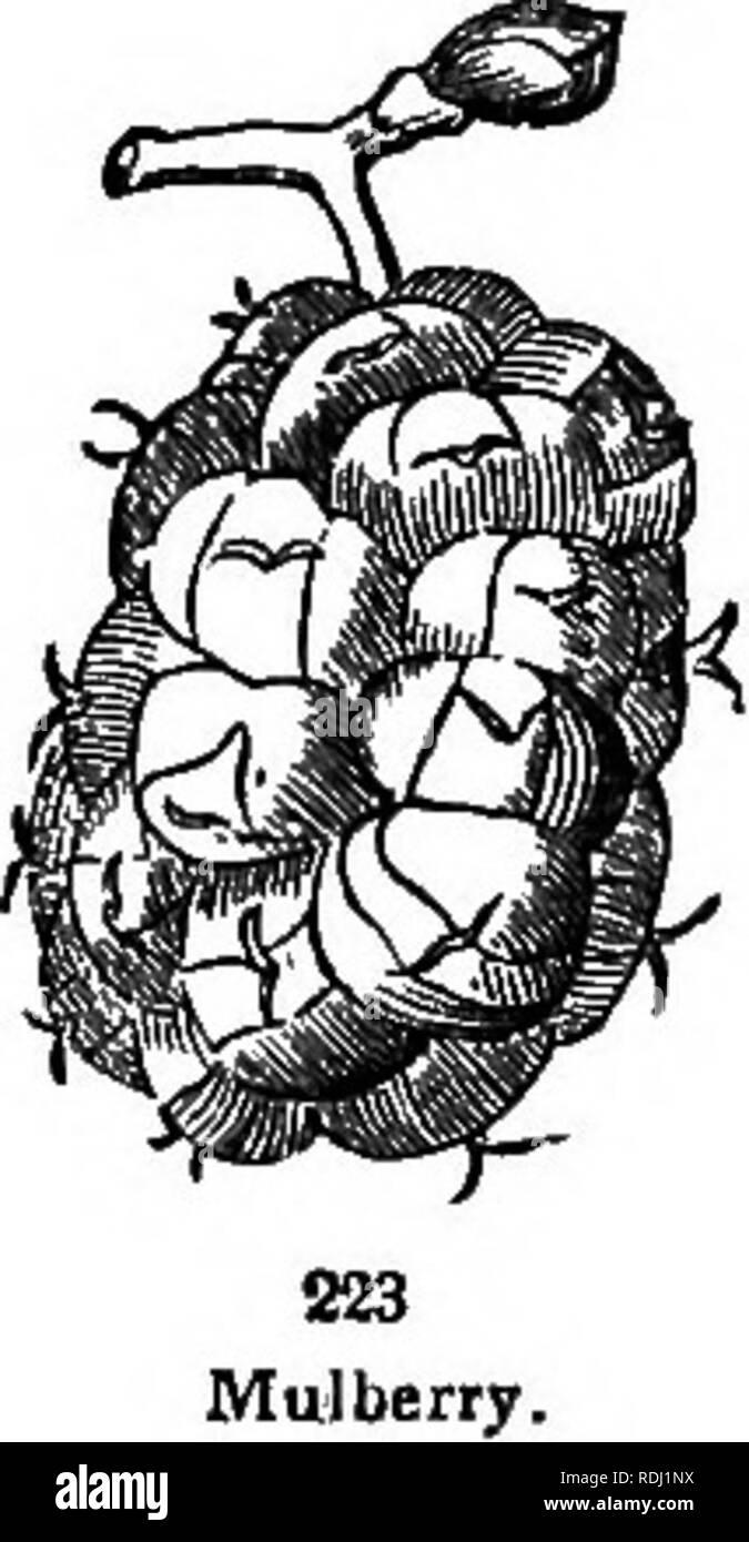 Oniscidea reproduccion asexual de las plantas
