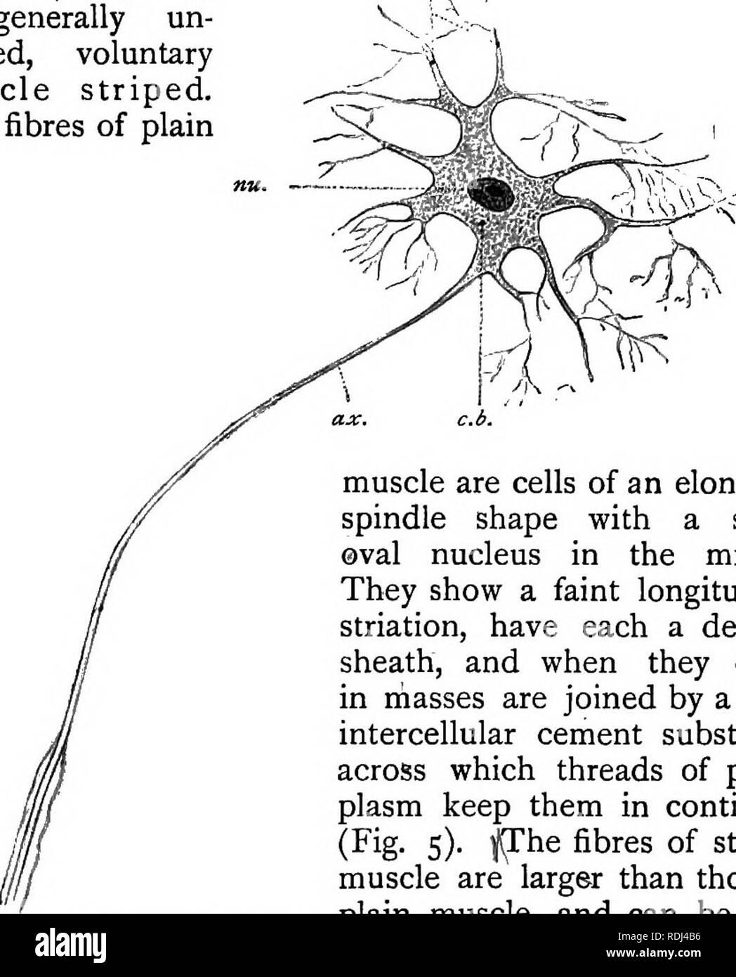 Un Manual Elemental De La Zoología La Zoología La Rana