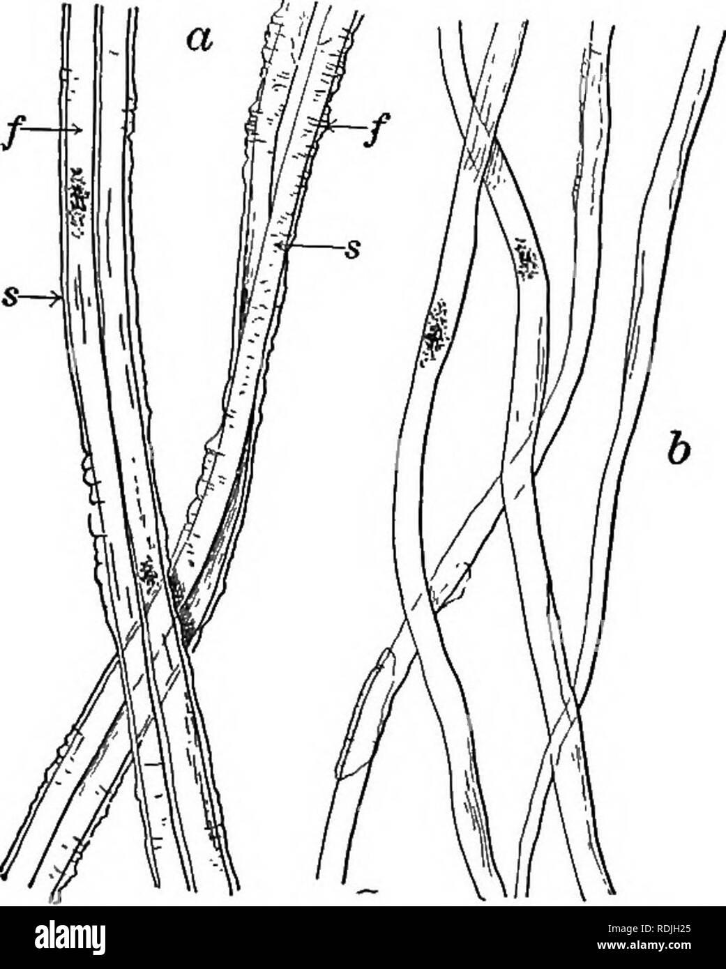 Elementos De Microscopia Aplicada Un Libro De Texto Para