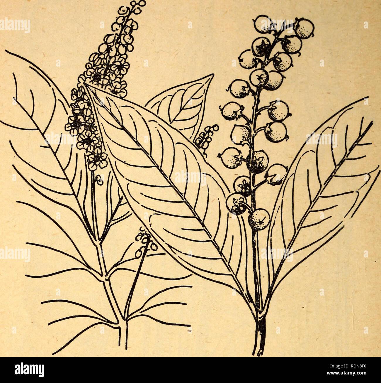 Plantas Venenosas Y Comestibles De La Región Del Caribe Las Plantas