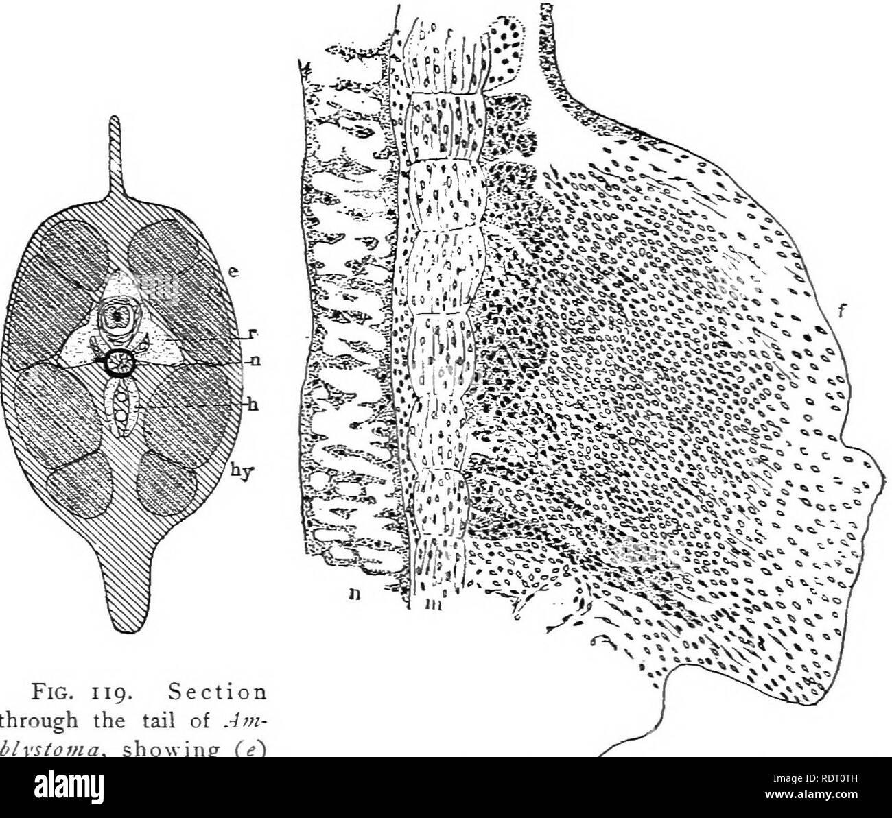 Libro De Texto De Zoología De Vertebrados Los Vertebrados