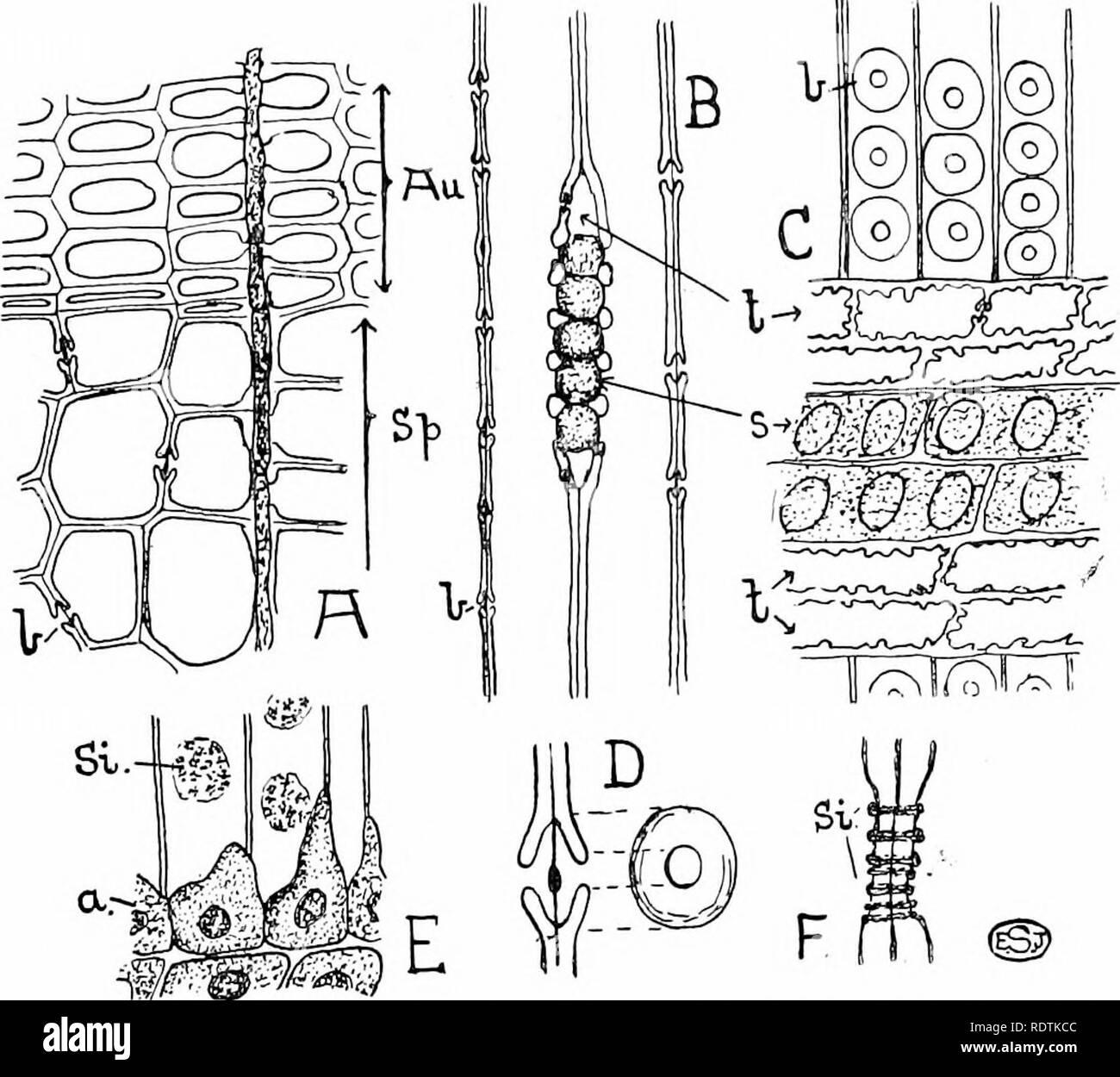 Una Introducción A La Estructura Y La Reproducción De