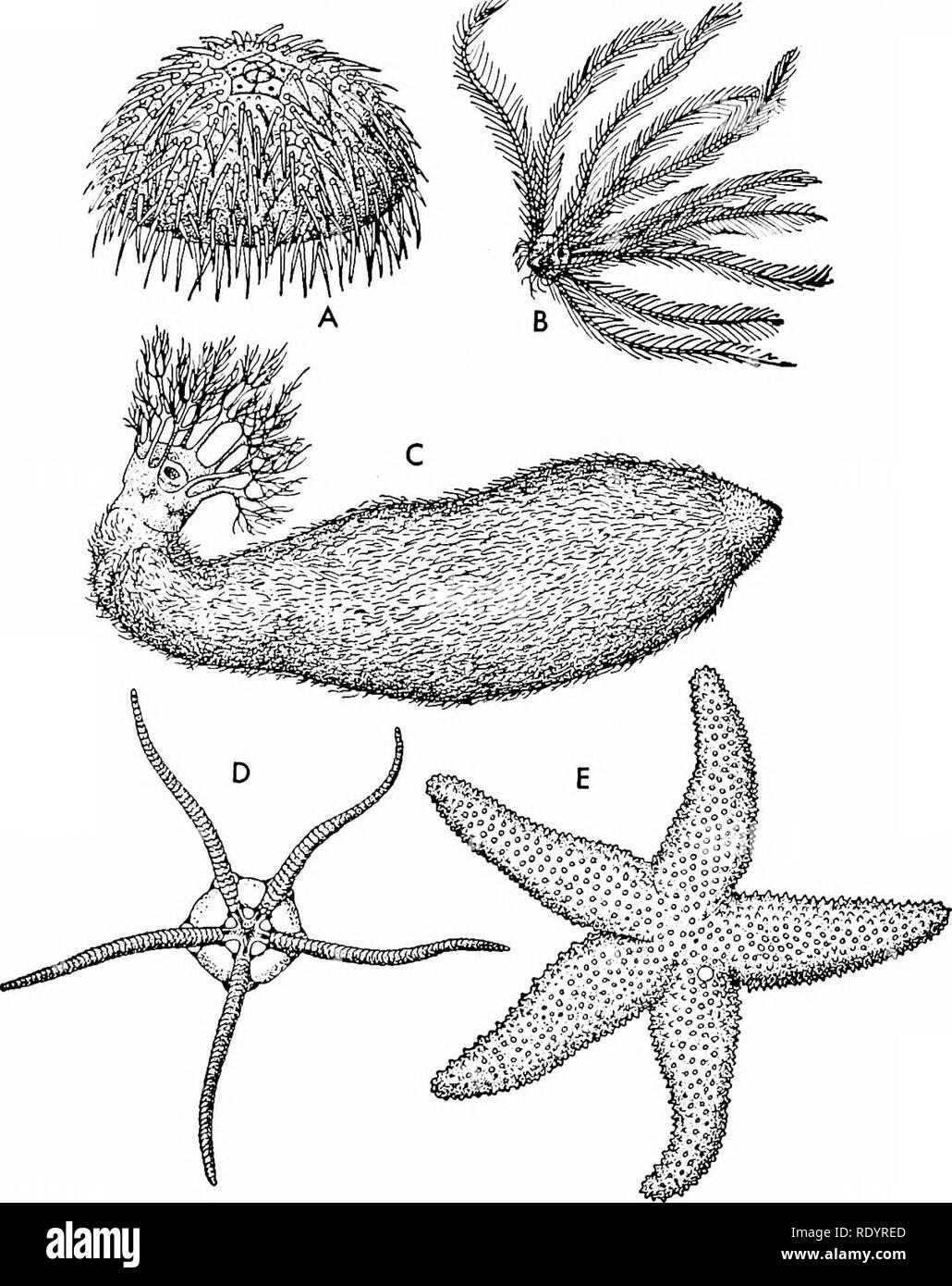 Principios De La Biología Moderna La Biología El Reino