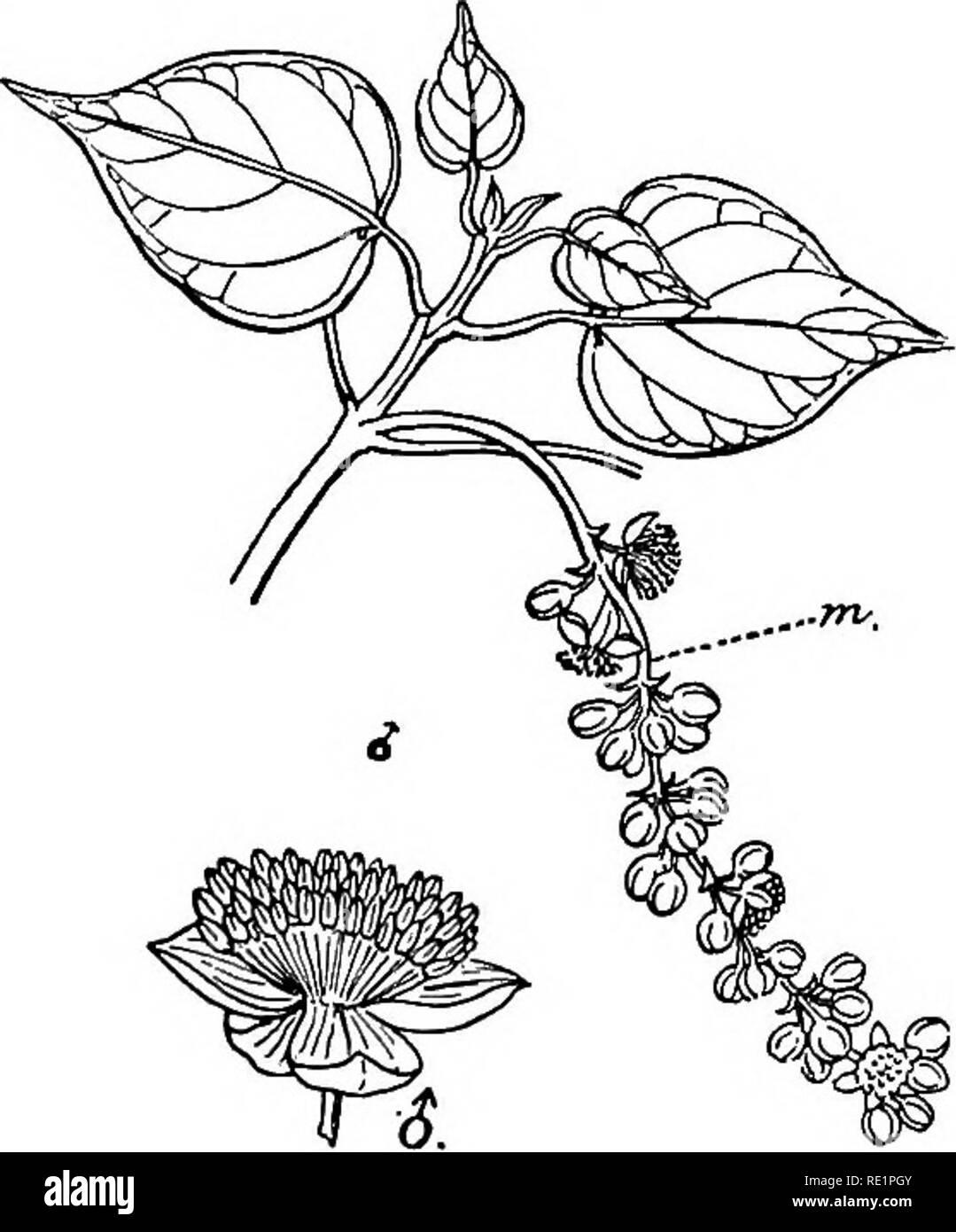 Dibujo De La Flor Y Sus Partes Para Colorear