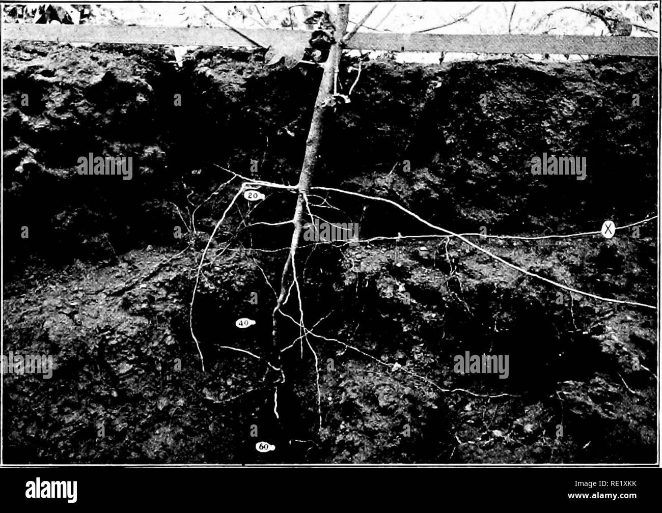 La Planta De Algodón En Egipto Estudios De Fisiología Y