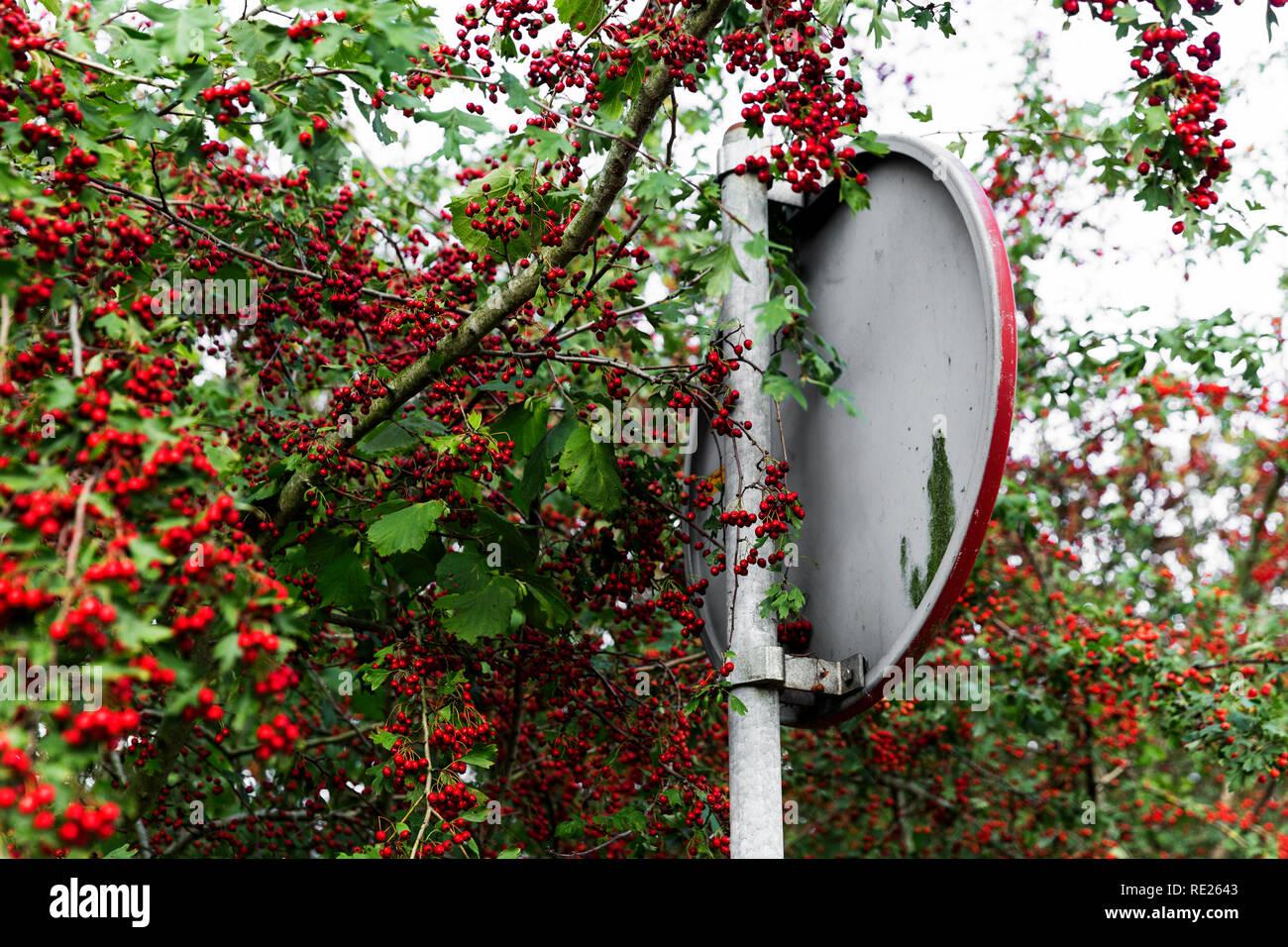Choke baya roja coincidente de la señalización de las carreteras. Una ilusión visual para aquellos atrevidos tomate el cerebro trabajar un poco. Imagen De Stock