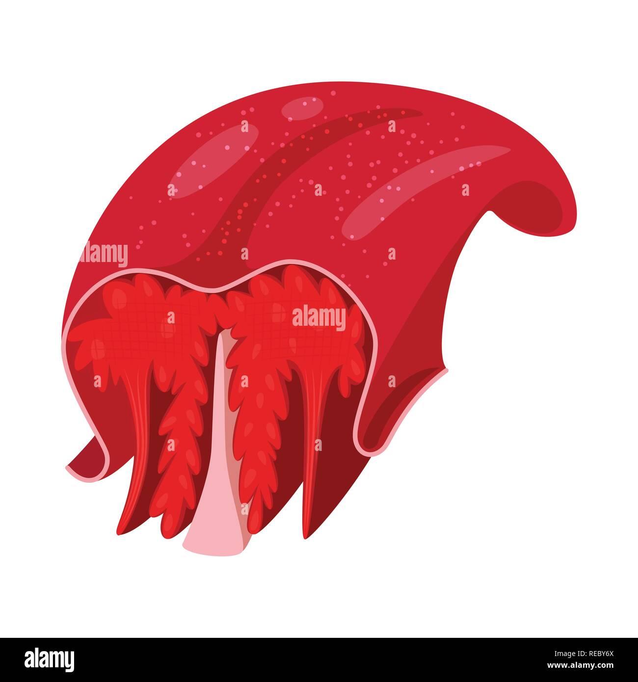 Lengua úvula Contracción Jefe Boca Medical Cara Sanidad