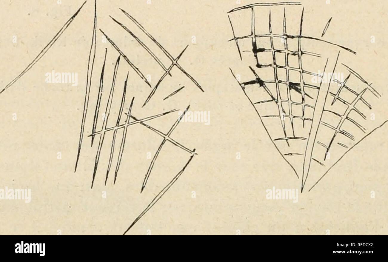 """. Compte rendu. La ciencia; la ciencia -- Congresos. Fig. 9. De marelles âJeux préhistoriques. Bois de la Grande-Beauce (Scine-el-Oise). G. Corte)"""" inv. N.-B. J'ai indiqué par des pointillés les lignes qu'on devait suivre pour la marche du jeu. Fig. lu. Huiles de la roche dile Le Irou du Sarrasin à Villeneuve-sur-Auvers ( SENA-el-Oise). Gourly inv.. Por favor tenga en cuenta que estas imágenes son extraídas de la página escaneada imágenes que podrían haber sido mejoradas digitalmente para mejorar la legibilidad, la coloración y el aspecto de estas ilustraciones pueden no parecerse perfectamente a la obra original. Asociación franaise po Foto de stock"""