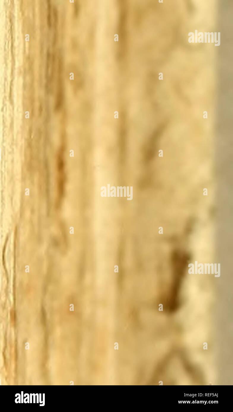 . Compendio della storia geografica, naturale e civile del regno del Chile. Historia natural; mapuche; Indian lingüística; Pie de imprenta 1776. . Por favor tenga en cuenta que estas imágenes son extraídas de la página escaneada imágenes que podrían haber sido mejoradas digitalmente para mejorar la legibilidad, la coloración y el aspecto de estas ilustraciones pueden no parecerse perfectamente a la obra original. Molina, Giovanni Ignazio, 1740-1829. Bolonia MDCCLXXVI. : Nella Stampería di S. Tommaso d'Aquino Foto de stock