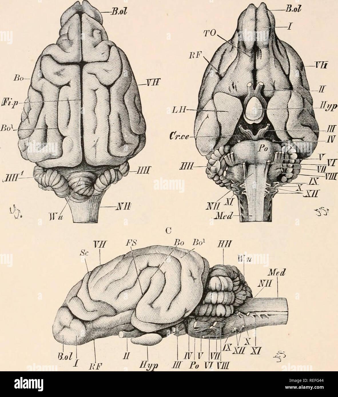 Anatomía Comparada De Los Vertebrados Anatomía Comparativo