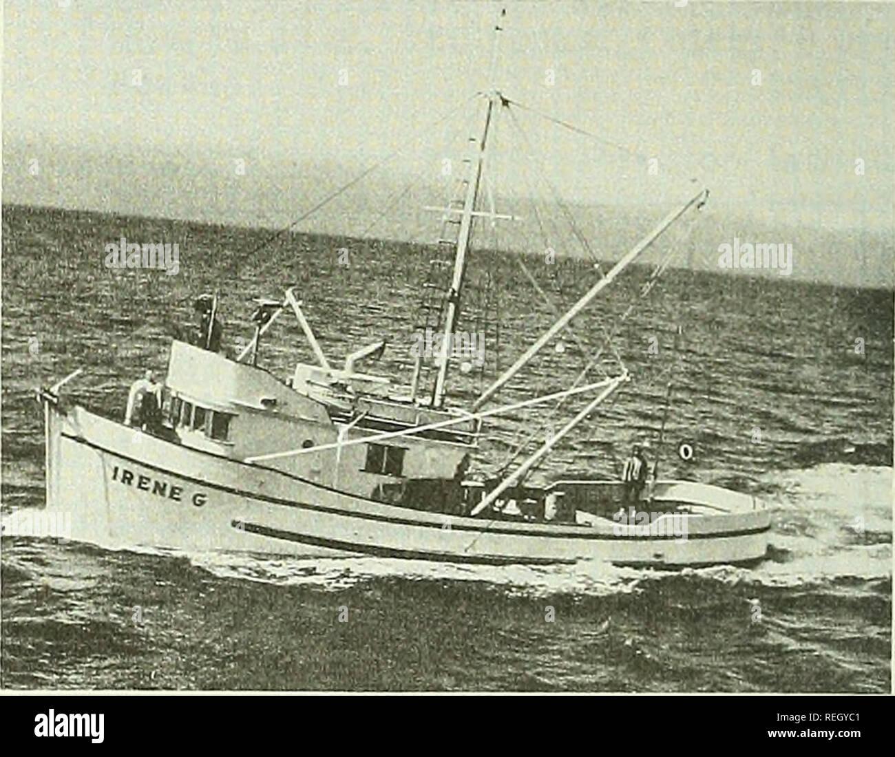 . Revisión de la pesca comercial. Pesca; el comercio de pescado. Los artículos de la pesquería de Cangrejo Dungeness alrededor de Kodiak, Alaska por Robert M. Meyer* Alaska cerqueros y barcazas de alimentación constituyen el grueso de la flota que pesca de cangrejos Dungeness en Kodiak aguas de Mayo a Octubre. Normalmente las tripulaciones número tres hombres que pueden definir, tire y restablecer más de diez cadenas de 30 pot un día en aguas poco profundas, las aguas cercanas a la costa. Los botes son cebadas con arenque, almejas o calamares. Como cada olla se tira, la captura se coloca en los tanques llenos con cir- culating agua del mar para asegurar la entrega en directo a las plantas de procesamiento. Los cangrejos son generalmente butche Foto de stock