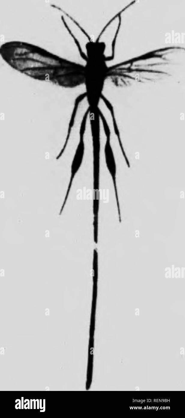 """. Maravillas de insectos [microforma] : un relato popular de estructura y el hábito. Los insectos; Insectes. /Â ' --._i arr . ^(^r[ii lars o hi iiL-. uf larKc talla TU ({);iANr ICH.VEl-Muns. """" V"""".'""""'' :!;i""""i!tt': hilt th.--. ^f- >1i'jivh r-f-aciin tanto ataque madera infunde aburrido, ami th. I.. Â ¢._.- pk'iiient es coitipo^>'' i (derecha) thr aburrido. ll.'-UJ>mw,  til 'â iMrkan.lvj llkr- apLwii.i.ii; Â""""-.ly:>.af,wh, ' Gonepteryx rliai ini.. Por favor tenga en cuenta que estas imágenes son extraídas de la página escaneada imágenes que podrían haber sido mejoradas digitalmente para la legibilidad - col Foto de stock"""