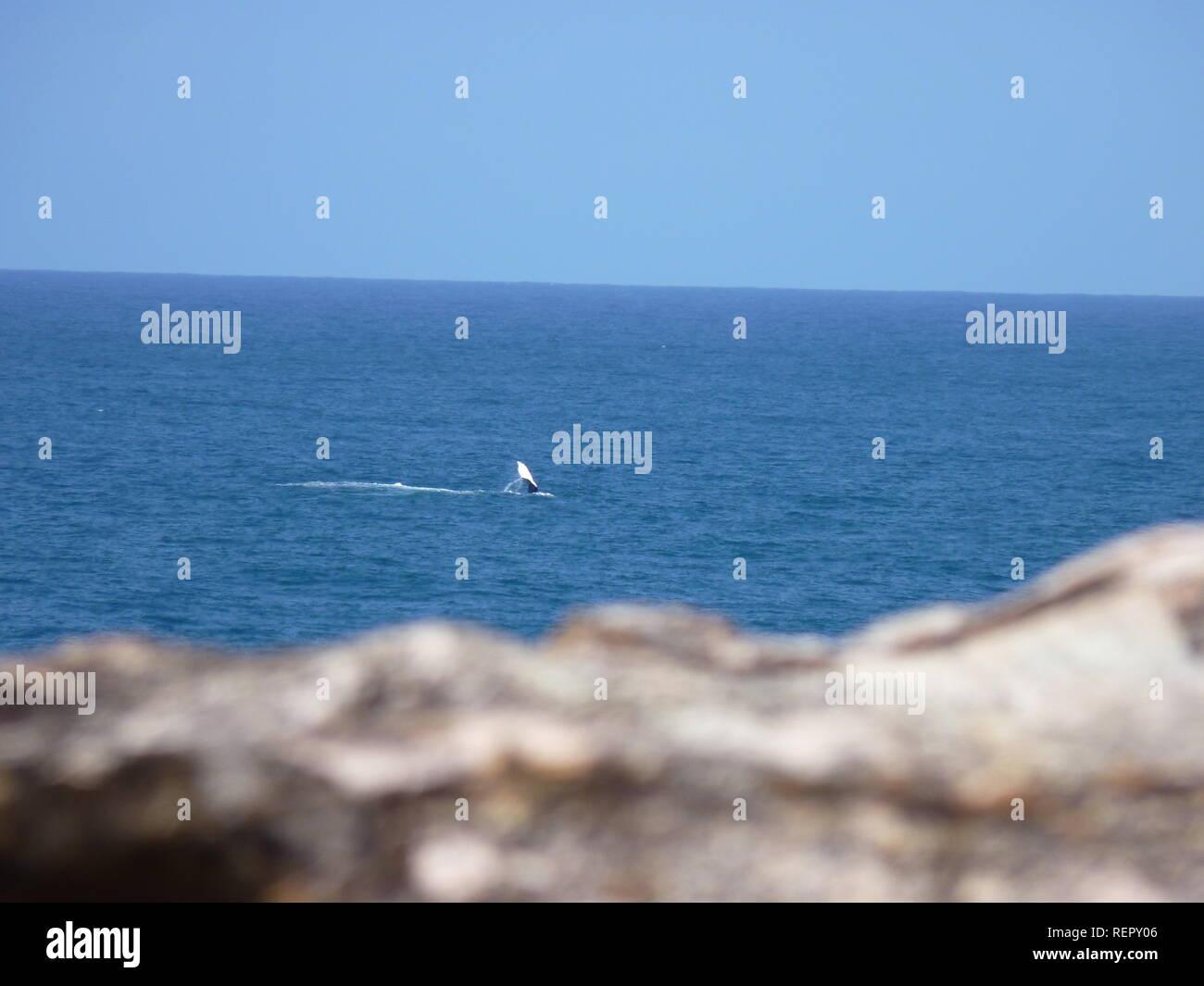 Vista al océano en el North Stradbroke Island, Brisbane Foto de stock