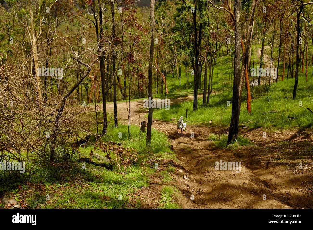 Padre e hija caminando por una colina empinada, Mia Mia State Forest, Queensland, Australia Foto de stock