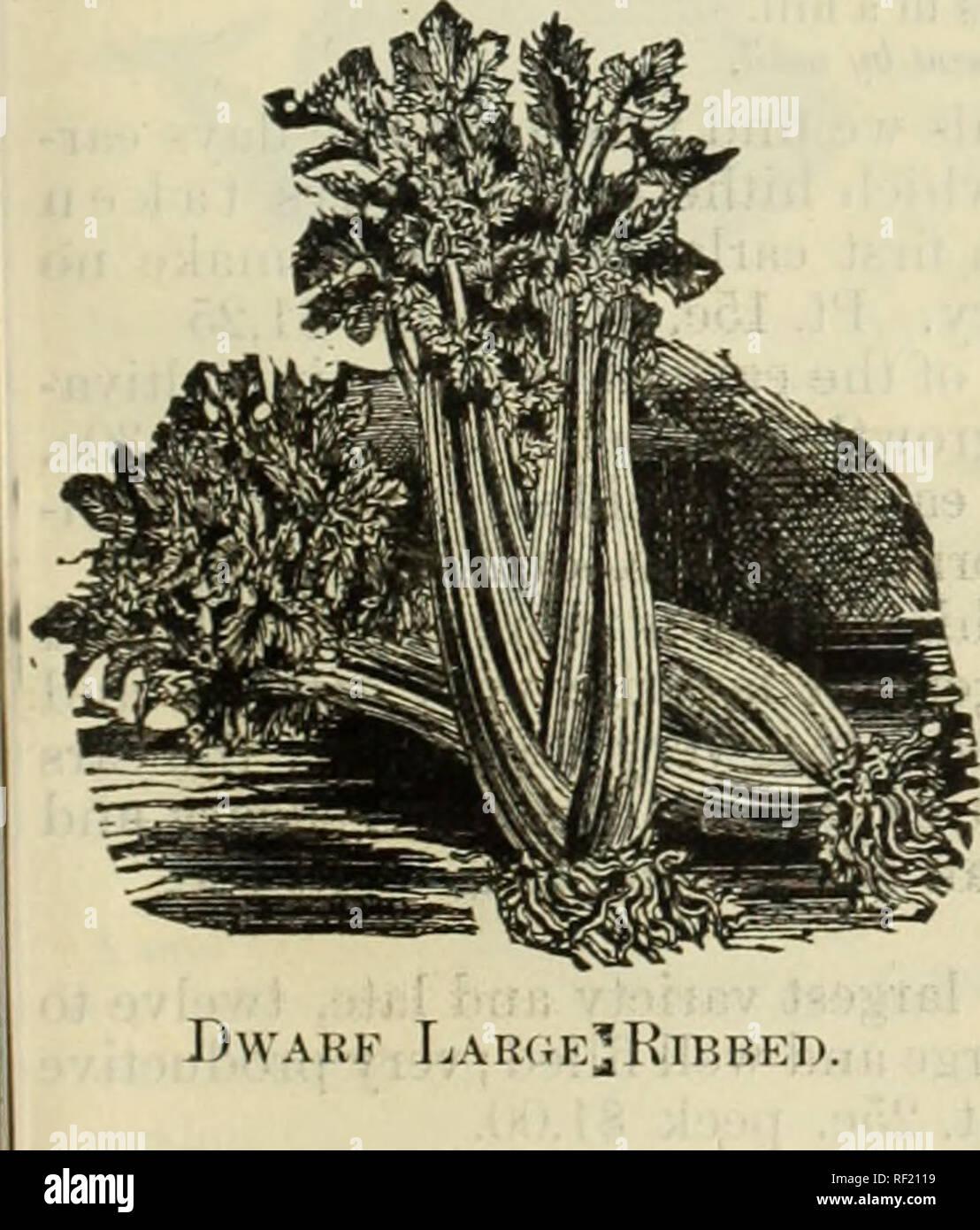 f53475bcdfce Catálogo de elección de flores y semillas de hortalizas. Viveros ...