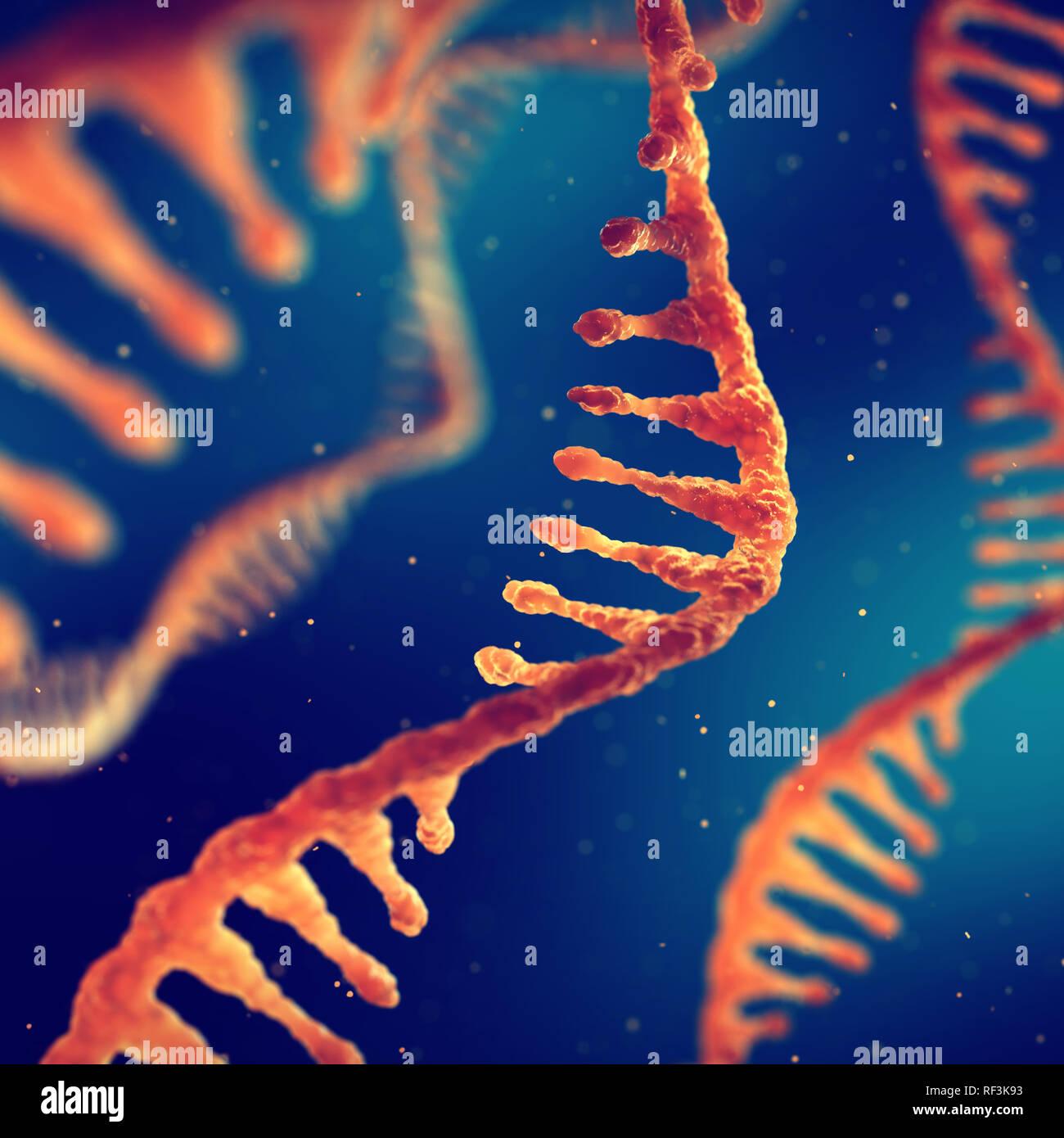 Hilo único ácido ribonucleico, ARN tratamiento e investigación Foto de stock