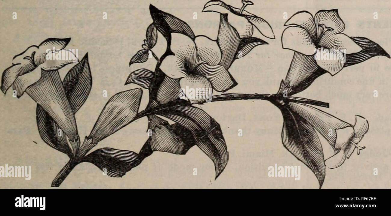 Plantas Autóctonas Y Exóticas árboles Amp Arbustos Viveros