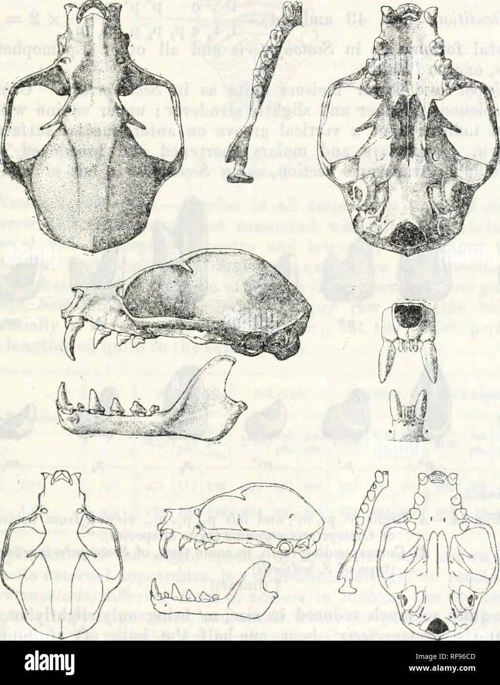 Catálogo De Los Quirópteros En La Colección De La Museo