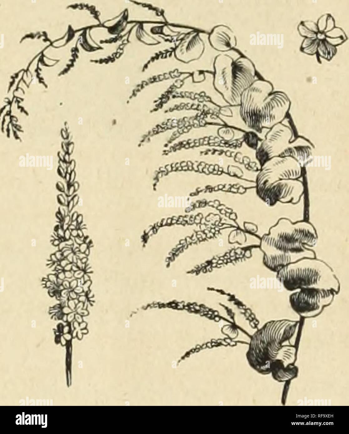 Catálogo De Holanda Bulbos Y Plantas Para La Siembra En
