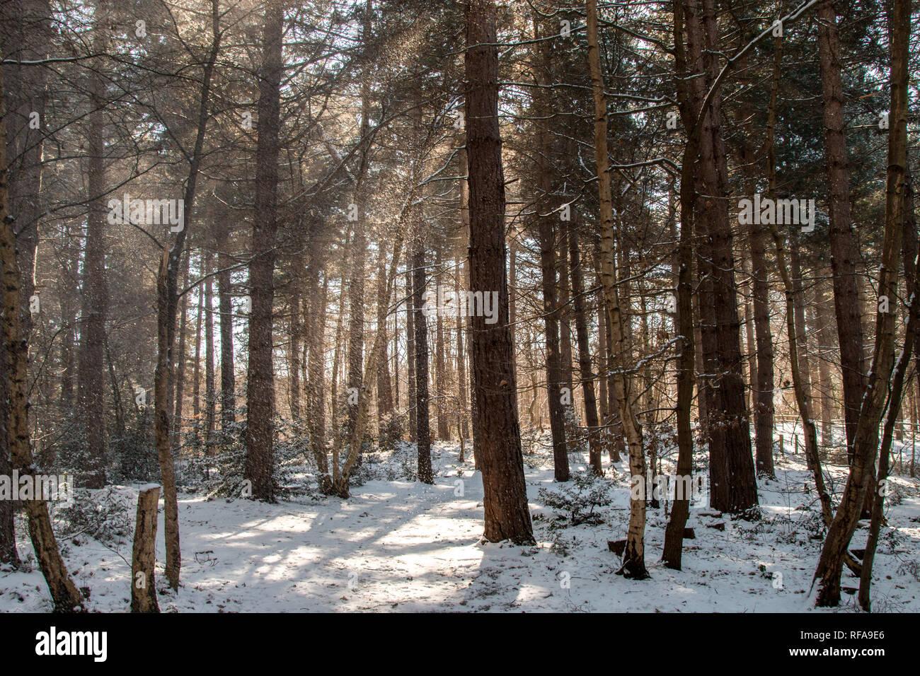 Nieve en el bosque Foto de stock