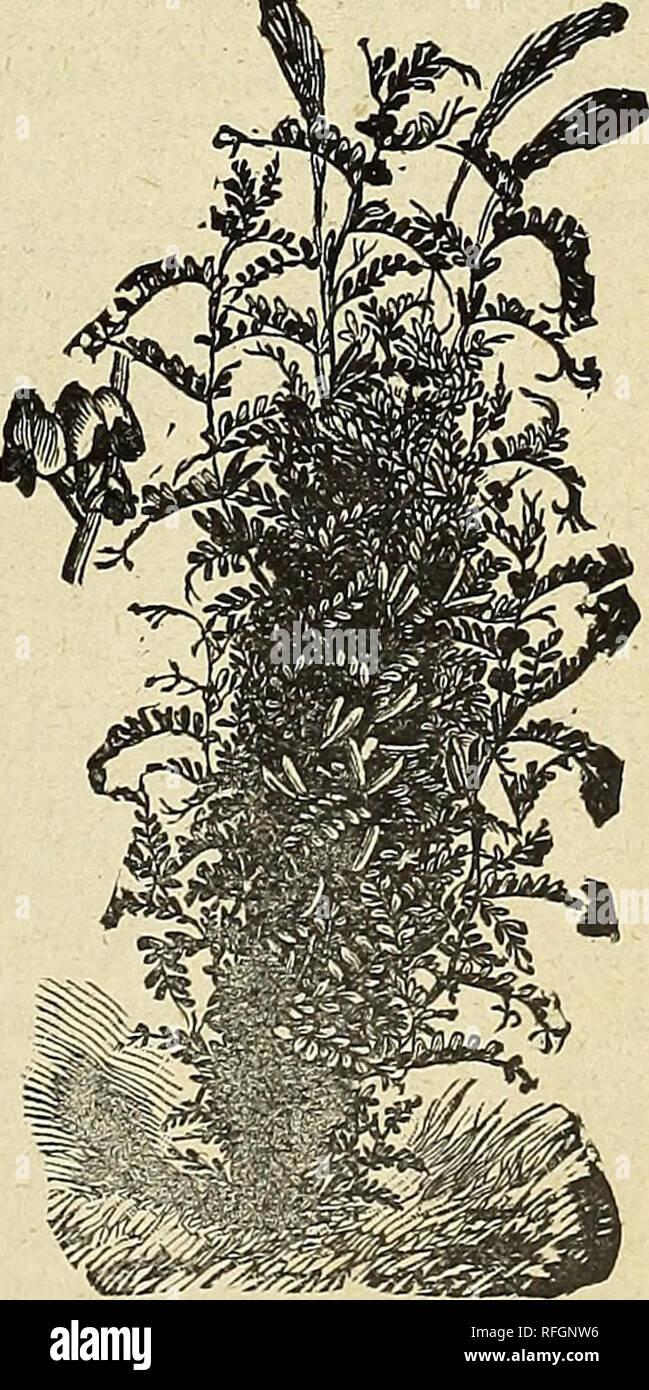 55d94fd41a Buenas semillas a precios justos   1900. Viveros de Minneapolis ...
