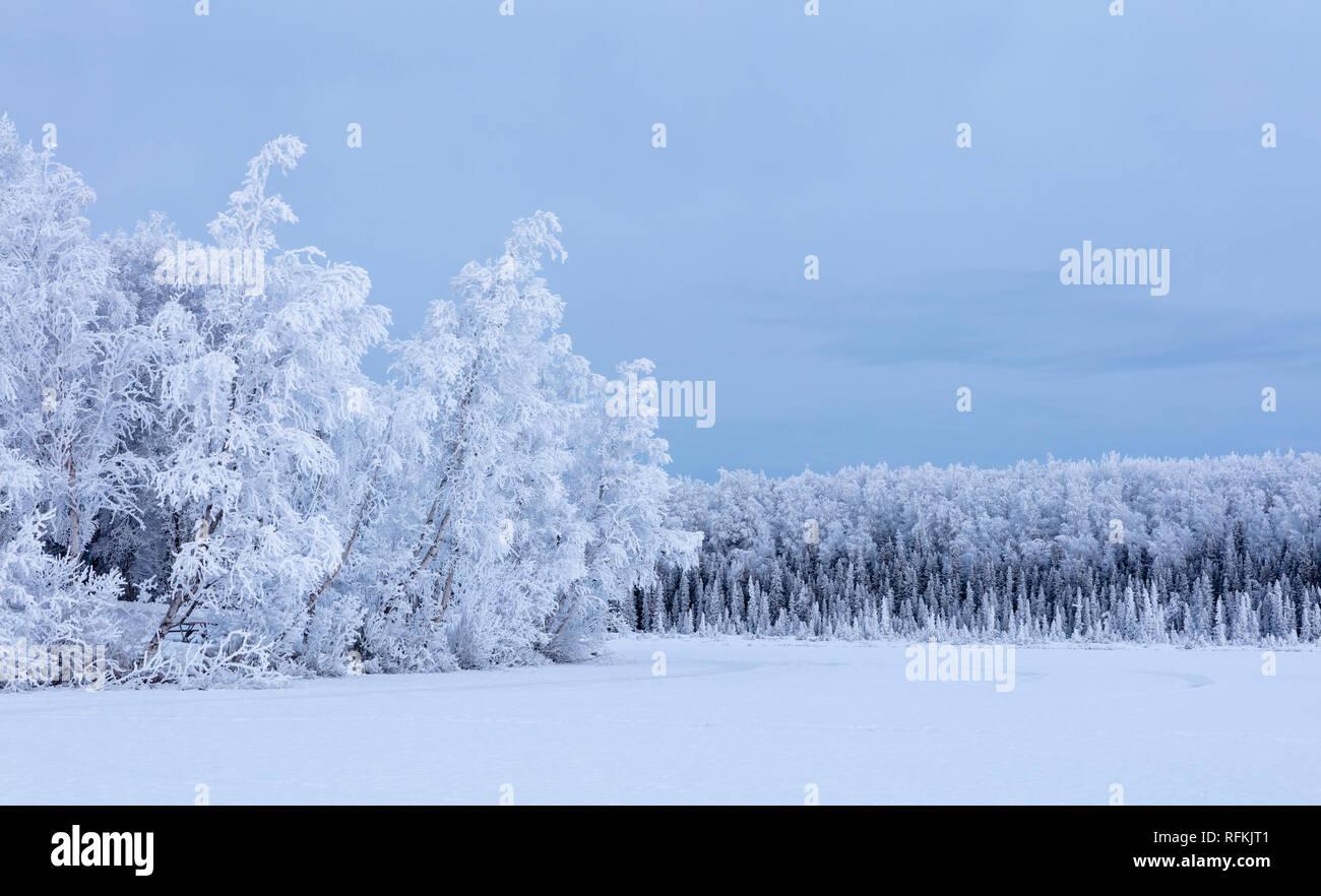La línea de árboles cubiertos de escarcha Clunie Lago en Southcentral Alaska. Foto de stock