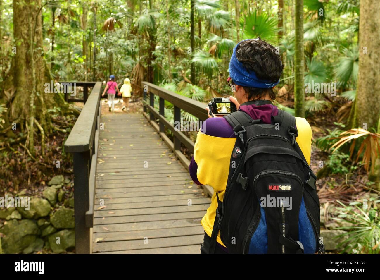 Una madre utiliza una cámara para tomar una foto de sus hijos caminar a través de una selva tropical, el Parque Nacional de Eungella, Queensland, Australia Foto de stock