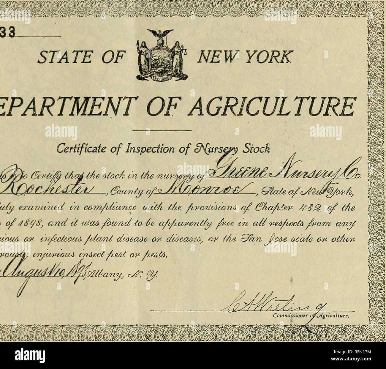 """. Catálogo de verano y otoño : macetas con plantas de fresa, árboles y plantas ornamentales. Viveros en Nueva York (estado) Catálogos de Rochester; catálogos de plántulas de árboles frutales; fruto de los catálogos. Certificado de inspección de cN&rs* """"Aod tActfjAe 6-toc/i cn tAe nu?> itiaA c/uty, ezami?icc£ m com/tttance tuti *3^aui& ofoa?id se t/JaA encontró a 6e a/t/i corUapiouA o c?s/cctioa<i ///a<?zt diaectAc ov (/(un dcvnyevoiifify iwjtwtoui indect fietit o fie&t&. Por favor tenga en cuenta que estas imágenes son extraídas de la página escaneada imágenes que podrían haber sido mejoradas digitalmente para legibilidad: una coloración Foto de stock"""