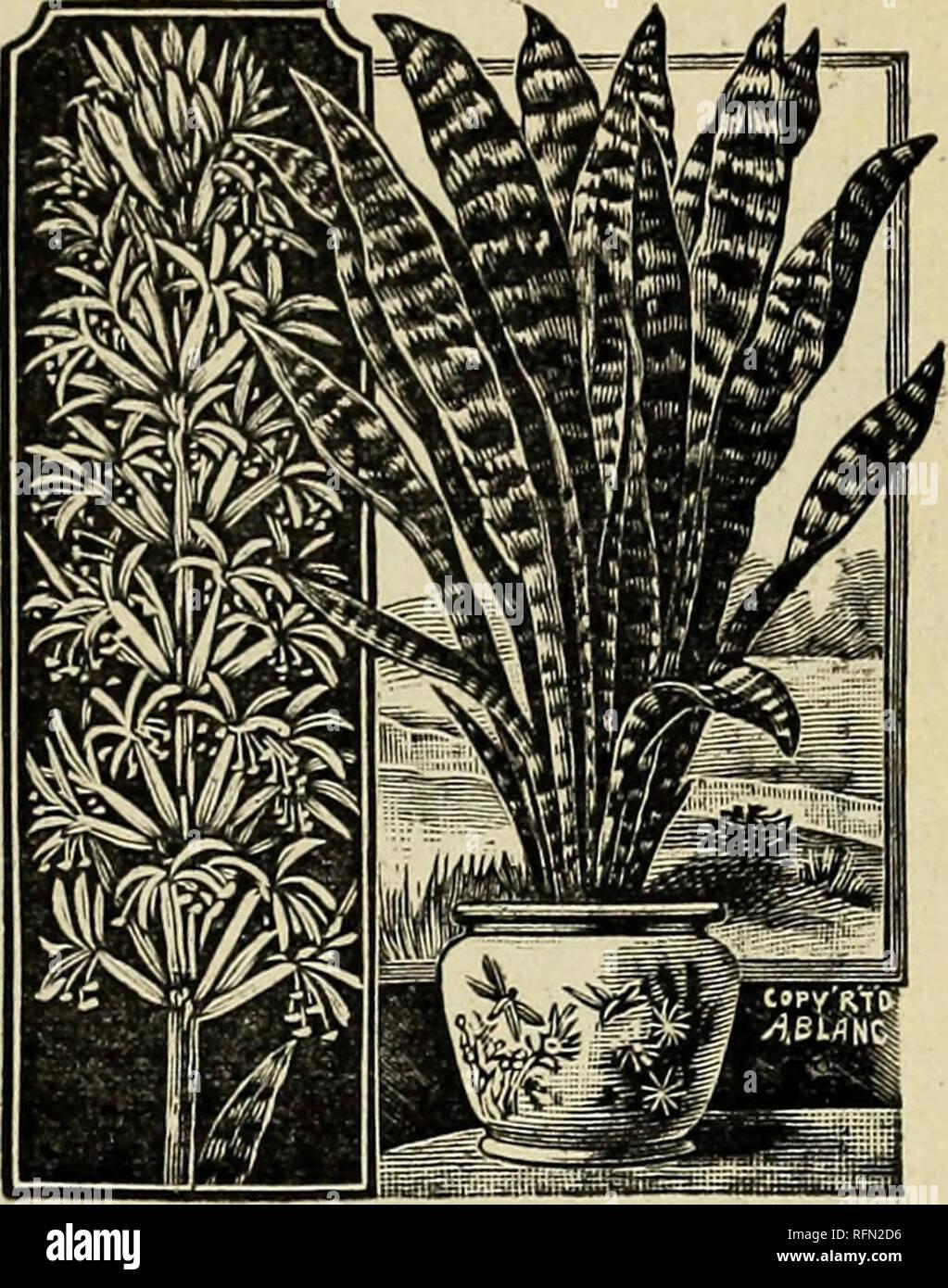 hermosas habitaciones de polvo fotos Plantas Semillas Bulbos Y Flores 27 Ao 1899 Viveros