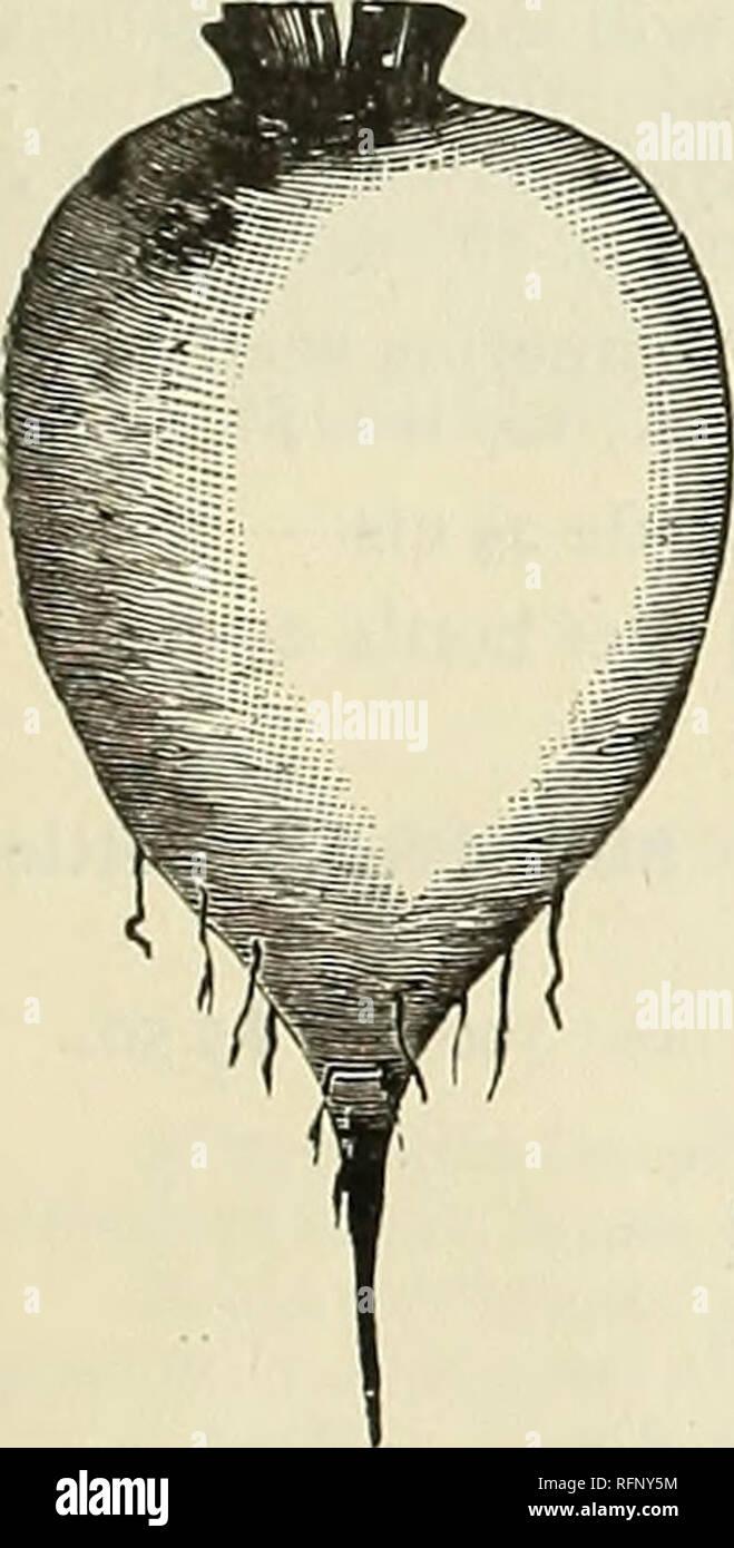 e212c87f2704 Catálogo anual de semillas y bulbos. Los catálogos de semillas de ...