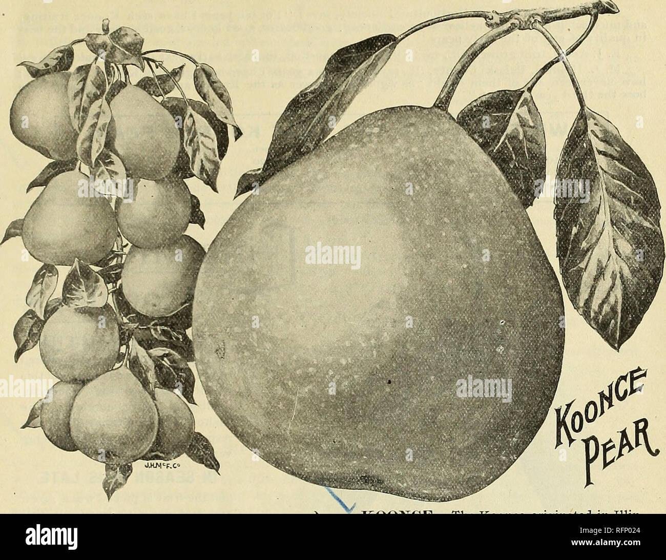 1b8a7e4037 . Catálogo descriptivo ilustrado y precios de mayoreo. Viveros  (horticultura) New Jersey Moorestown catálogos  viveros de Nueva ...