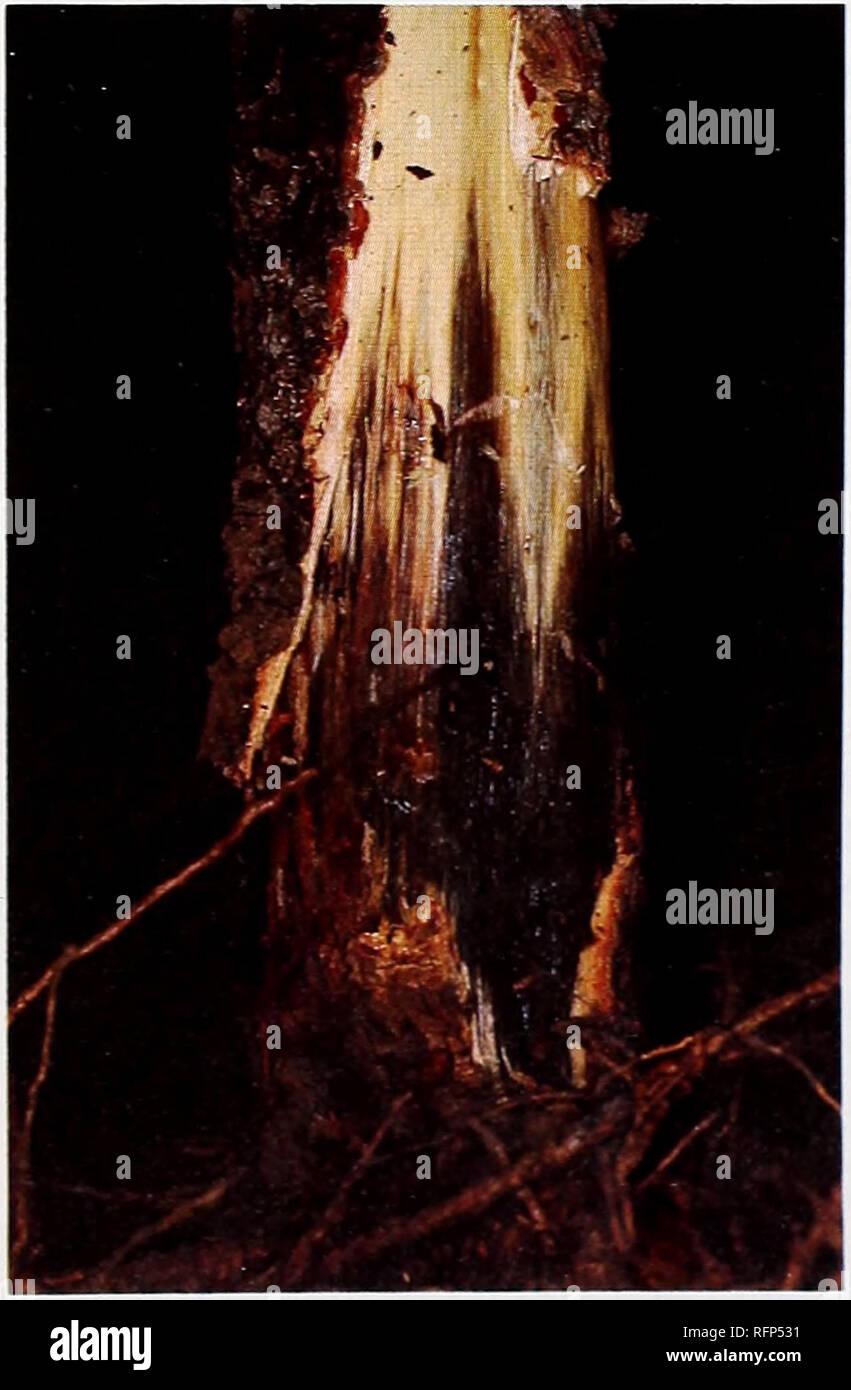 a37cbcd749 Condiciones de plagas y enfermedades forestales en los Estados Unidos 1979.  Las plagas de .
