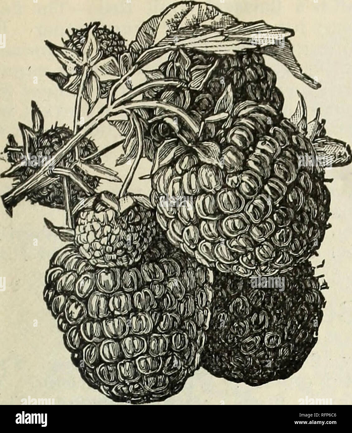 a899ce87f6 . Catálogo de árboles frutales y ornamentales