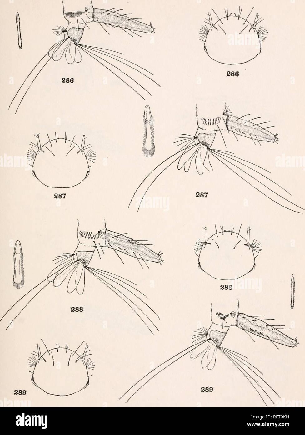 88a46689e . Publicación de la Carnegie Institution de Washington. Publicación 159  Placa 90. Detalles de LARV . 286.