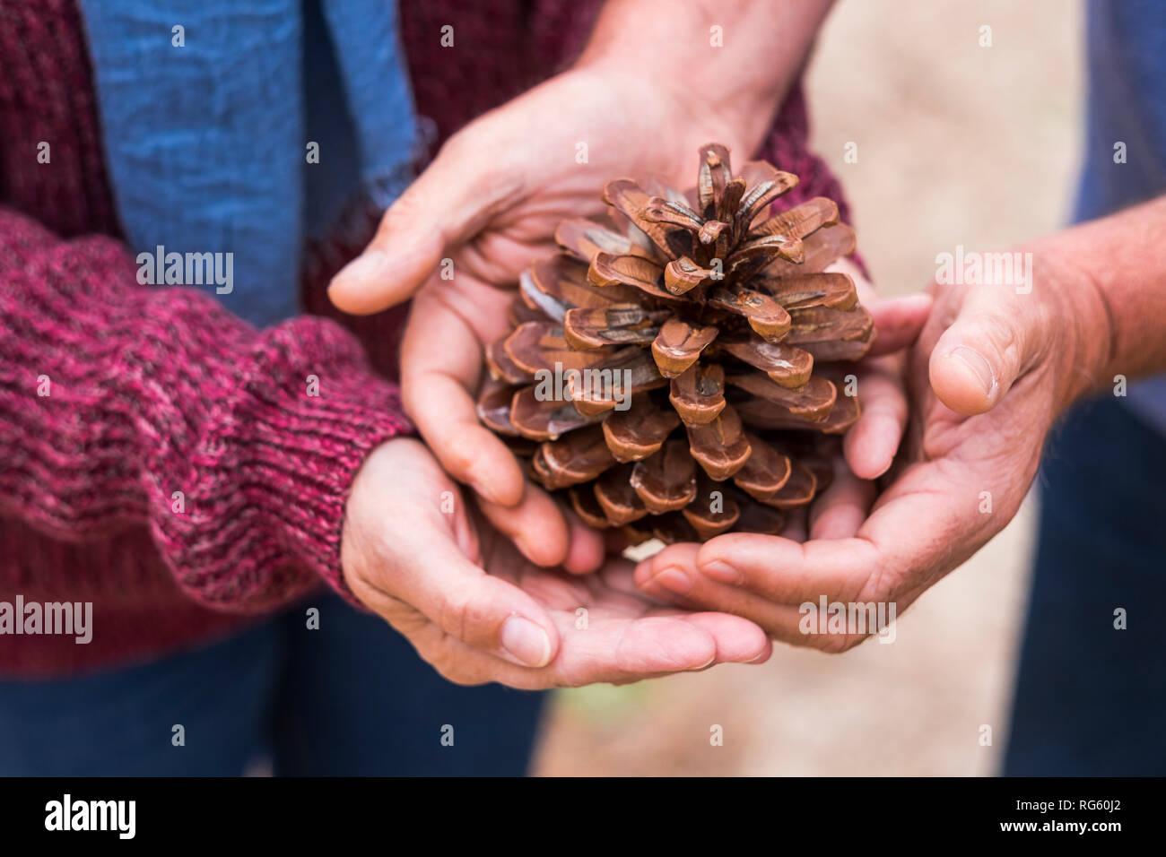 Par de manos del Cáucaso tomar y proteger un cono de pino juntos - suavemente y amablemente con la naturaleza humana para construir un mundo nuevo Foto de stock