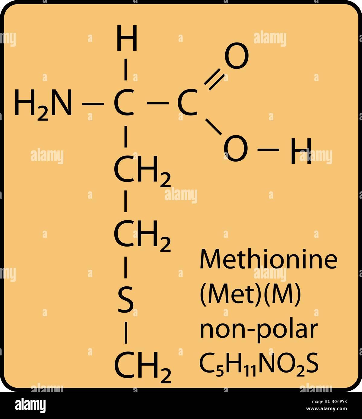 Molécula De Aminoácido Metionina Estructura Esquelética Imagen Vector De Stock Alamy