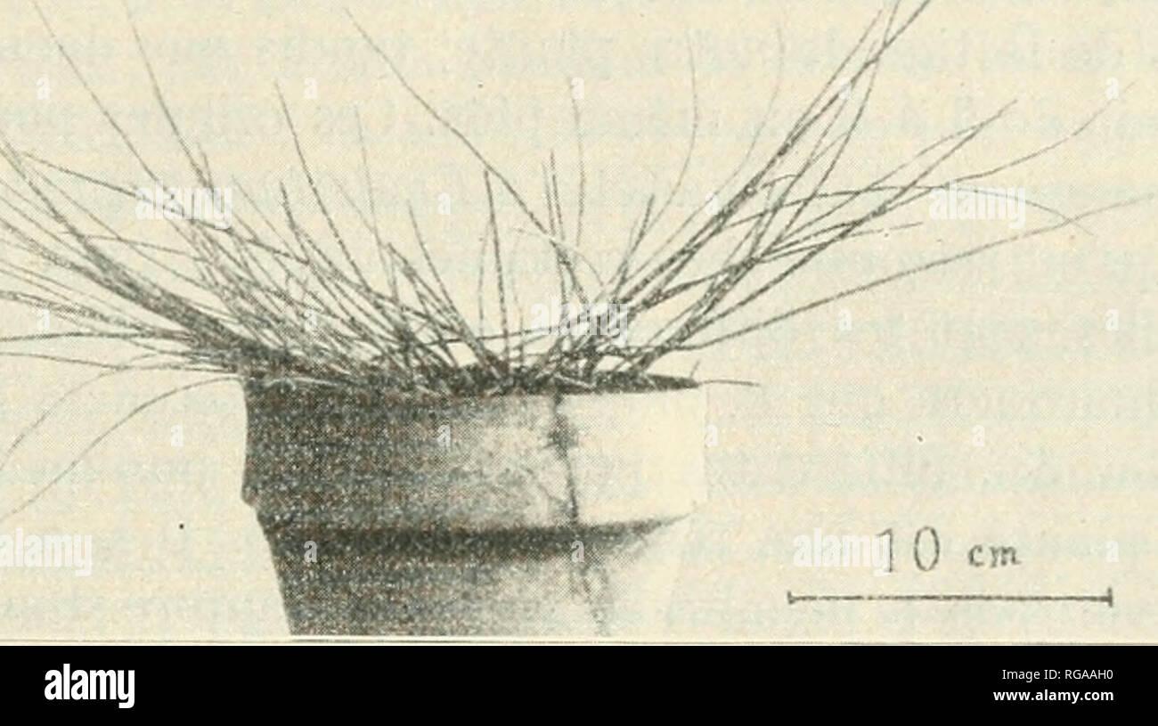 ". Boletín de la Socit vaudoise des Sciences Naturelles. Historia natural; Historia Natural -- Suiza. .VIMIII K M.Vll.Ll.lKH (Â""I!SI.k 1 h U M IS INS )l I IS, 1 L ,m ini..MAL.L enfermo (l'iiii oiiciili mur' du S.-SW. au X. - NI""'-, cl iccc;uil pai' le soleil consccjucuL ius(|u""uu peu après ; pcndaui midi l'hiNci' 1res sec de ])'2i) à 1021,1un piaule lui eomplèteiiieul uc^lii^ée el l.i-(''s rai'emcid arrosée: elle perdil louli ses del LII^'es aéi'ieuues el je la croyais couiplel( uicul, morle ; elle se d(''-eloppa ccpt'udaid. au priidemps, domia de uoui- hrcMiscs tiges, mais h Foto de stock"