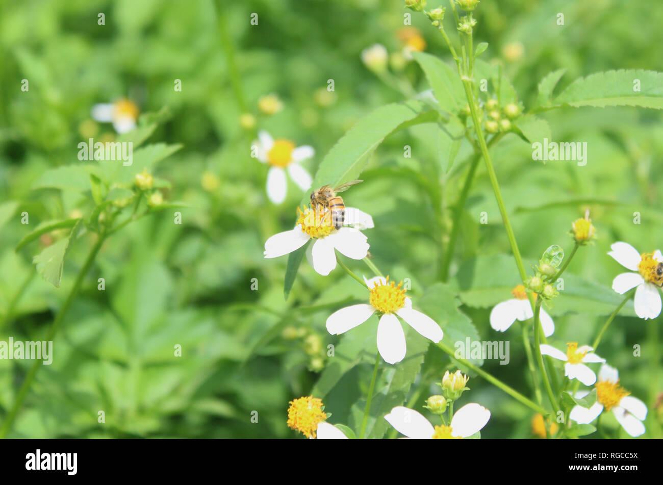 Cerca del jardín y las abejas tomando nectar Imagen De Stock