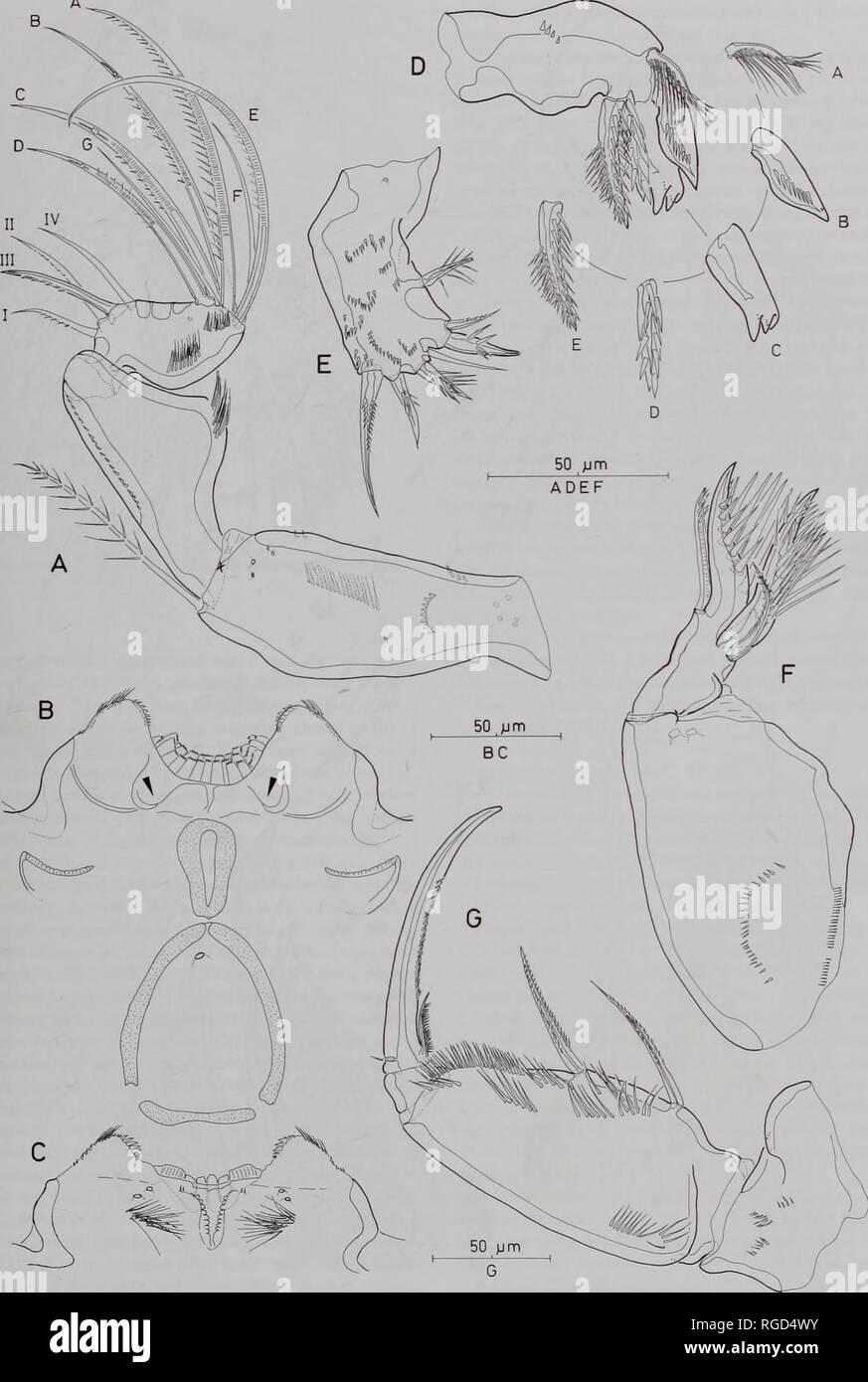 Boletín Del Museo De Historia Natural De La Zoología Siete Especies
