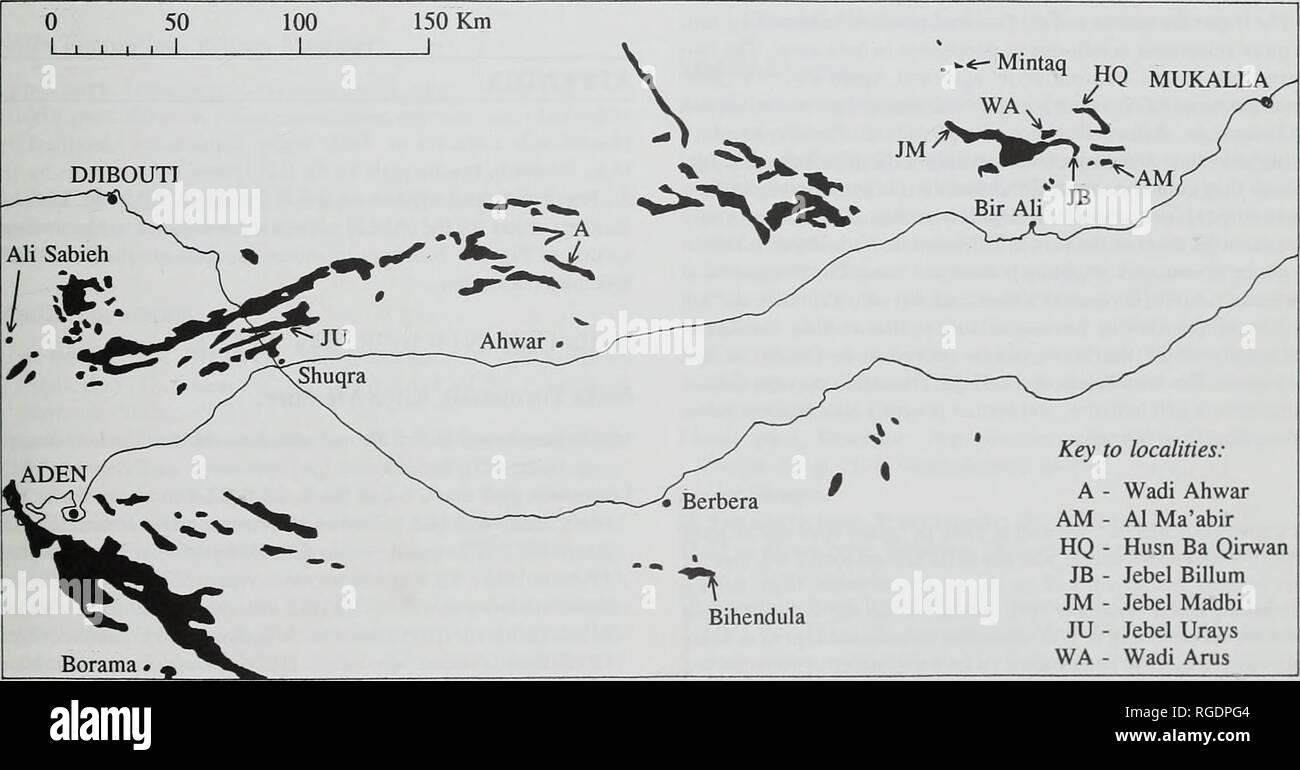 . Boletín del Museo Histort Natural. Geología series. Jurásico y Cretácico Inferior 25 Formación de Wadi Hajar, ciertamente ha caído desde el shelly arenisca. 5 m de espesor en la base de la formación Qishn inmediatamente superior. Es Hauterivian superior en edad, y es la primera fecha obtenida por esta parte basal de la formación. La piedra caliza es generalmente Orbitolina reconocieron ser Barremian superior en la edad de los foraminíferos [Palorbitolina lenticularls (Blumenbach) y Choffatella deciplens Schlumberger) que contenga (Beydoun, 1968: 92). Tres ammo- noches fueron grabados por Beydoun, 196 Foto de stock