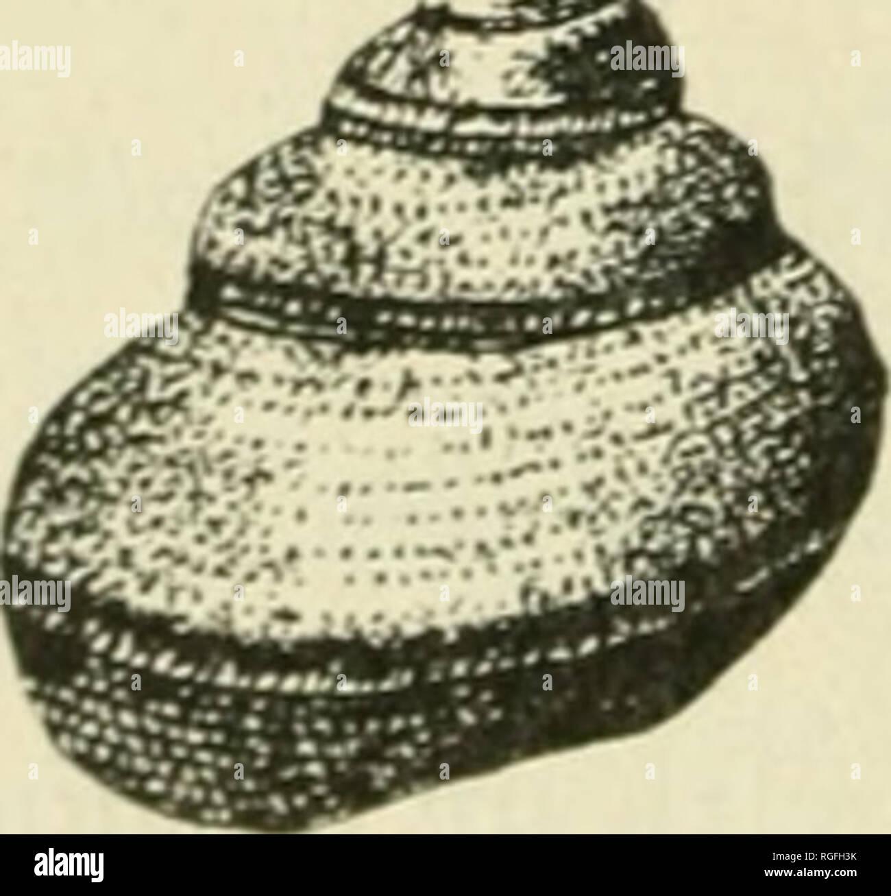 Boletín de la Sociedad de Ciencias Naturales de Buffalo. Historia Natural  -- Nueva . 3074230872f