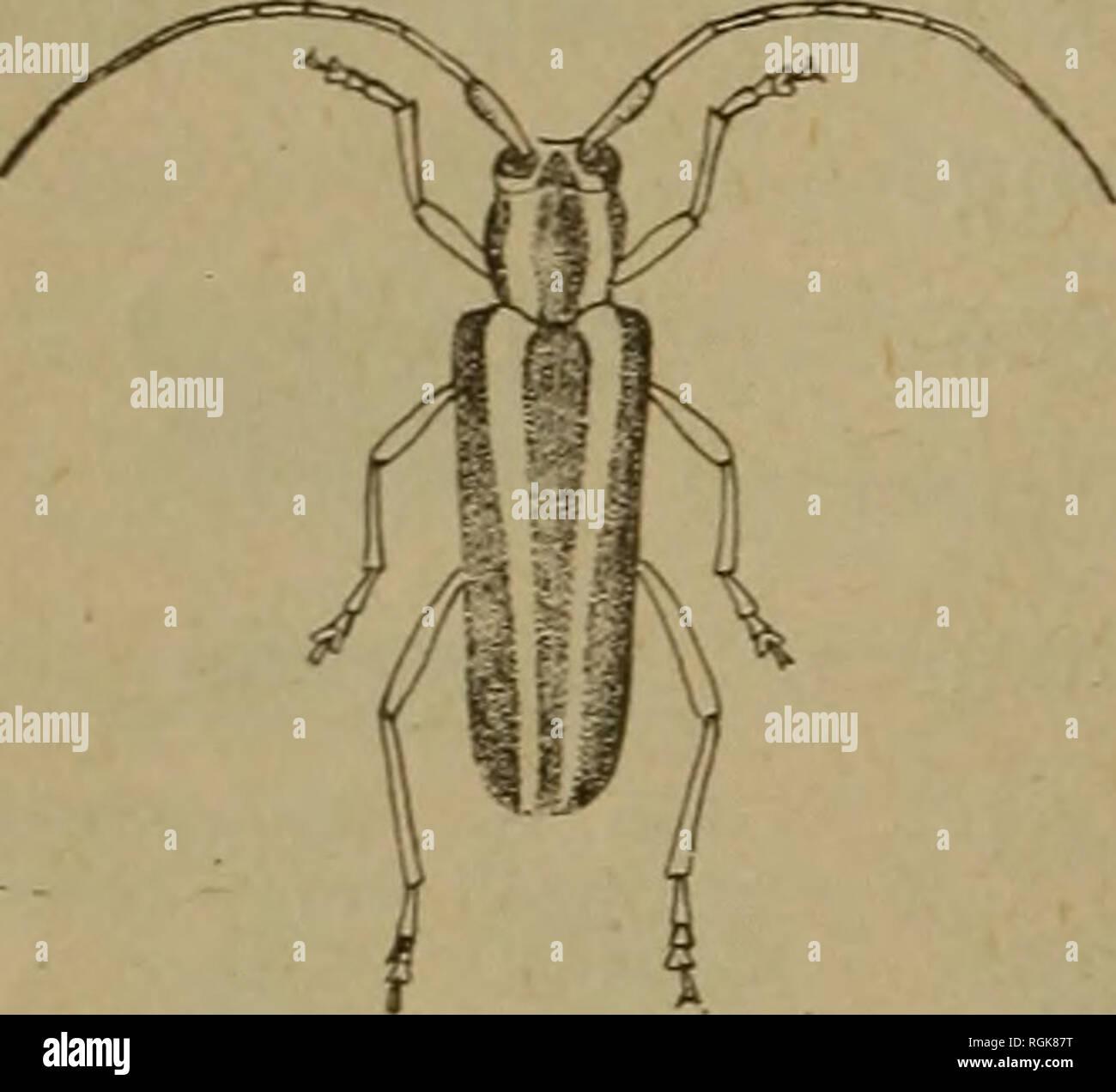 Escarabajo Arandela diversos Usos Ver descripción-N0122385