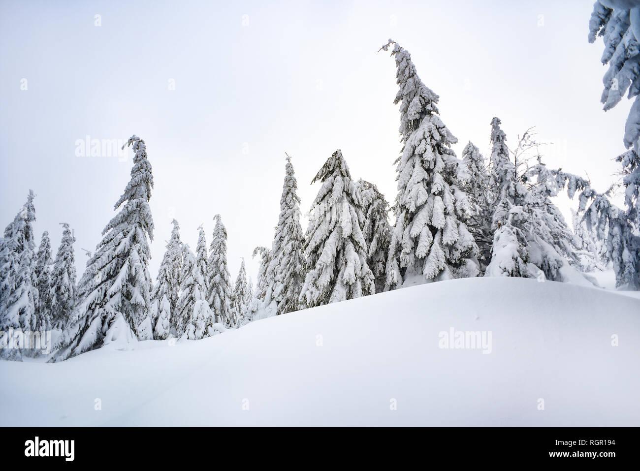 Árboles cubiertos de nieve en las montañas, paisajes de montaña y bosques de invierno. Foto de stock